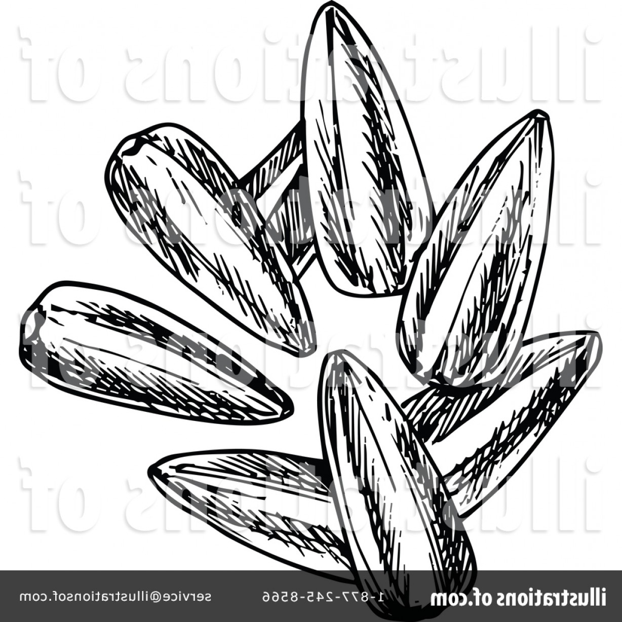 Vector Black And White Sunflower Seed: Royalty Free Sunflower Seeds Clipart Illustration