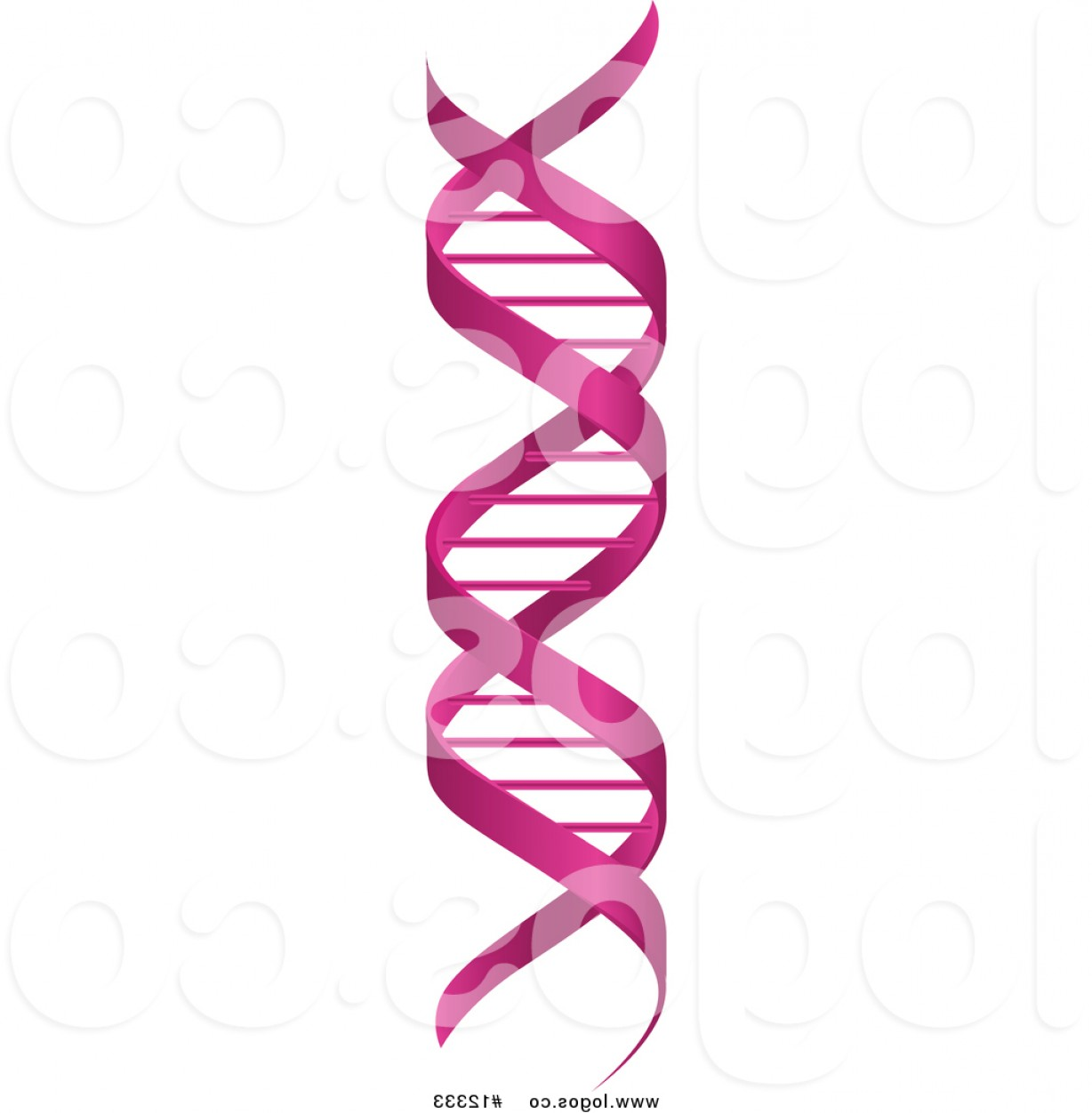 DNA Helix Vector: Royalty Free Vector Logo Of A Pink Double Helix Dna Cloning Strand By Vector Tradition Sm