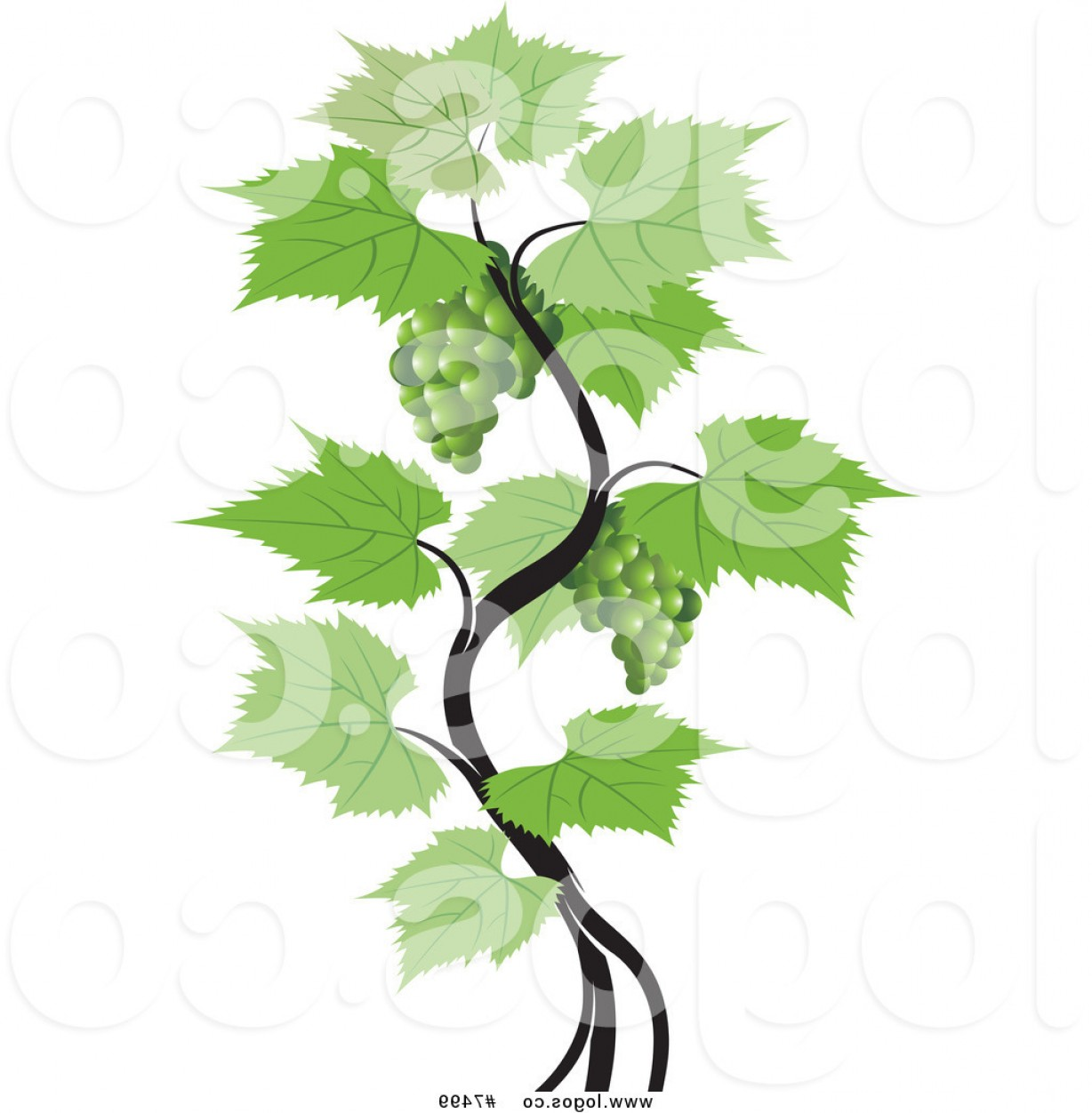 Vector Vine Tree: Royalty Free Vector Of A Green Grapes Vine Logo By Lal Perera
