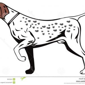 Pointer Dog Vector: German Pointer Dog Vector Illustration