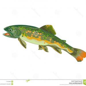 Speckled Trout Vector: Photoillustration Of A Rainbow Trout Jumping Out Of The Water