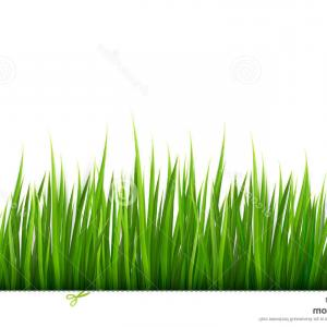 Grass Vector Graphic: Tuft Of Grass For The Banner Vector