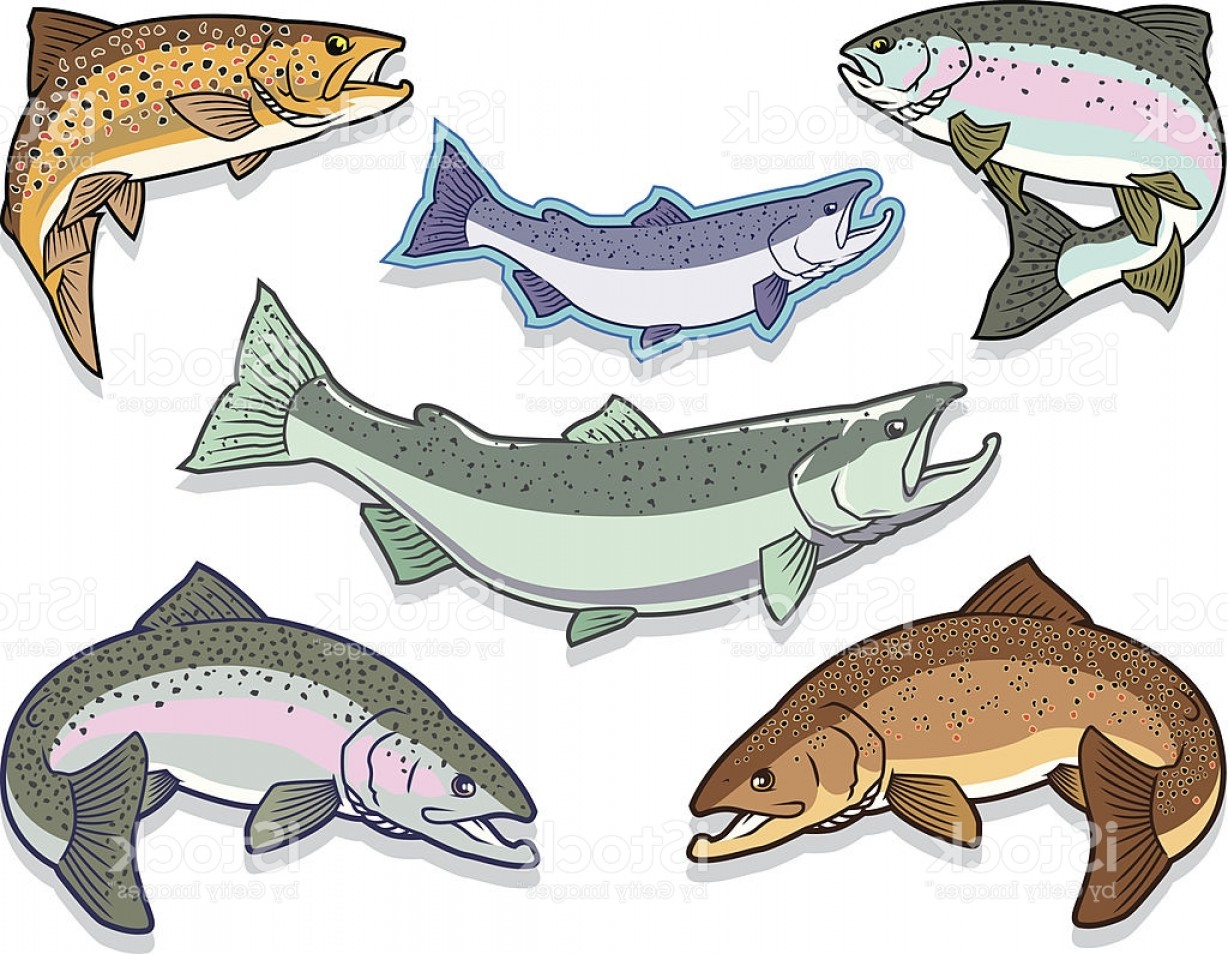 Speckled Trout Vector: Salmon And Trout Set Gm