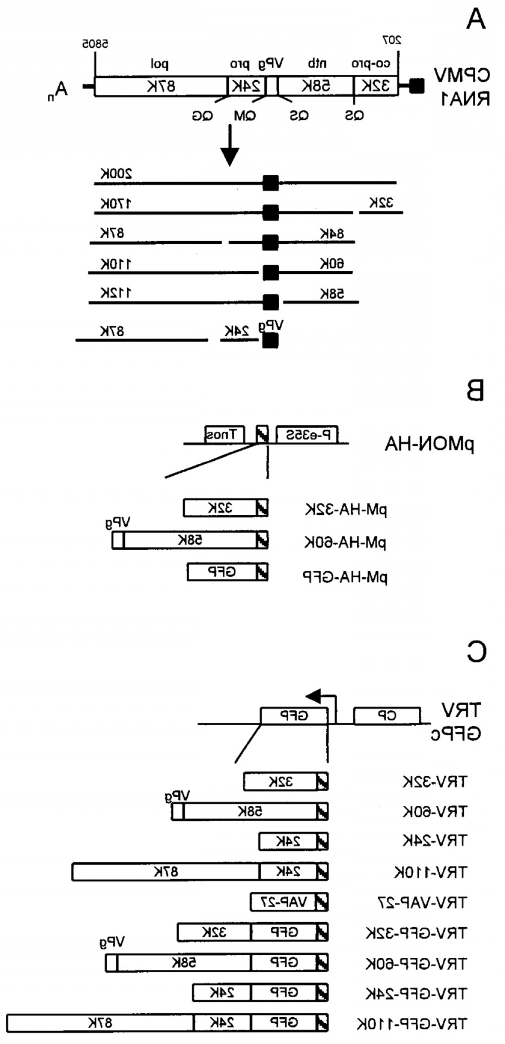 Pmon Vector: Schematic Diagram Of Cpmv Rna And The Trv Rnabased Expression Vector Used To Expressfig