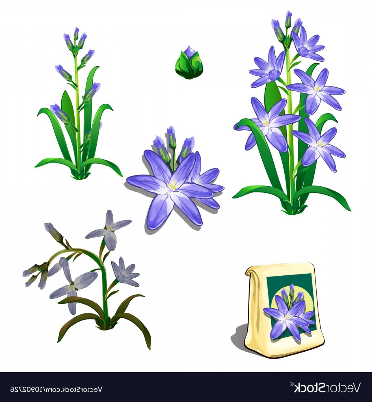 Seed Flower Vectors: Seeds Stages Of Growth And Wilting Purple Flowers Vector