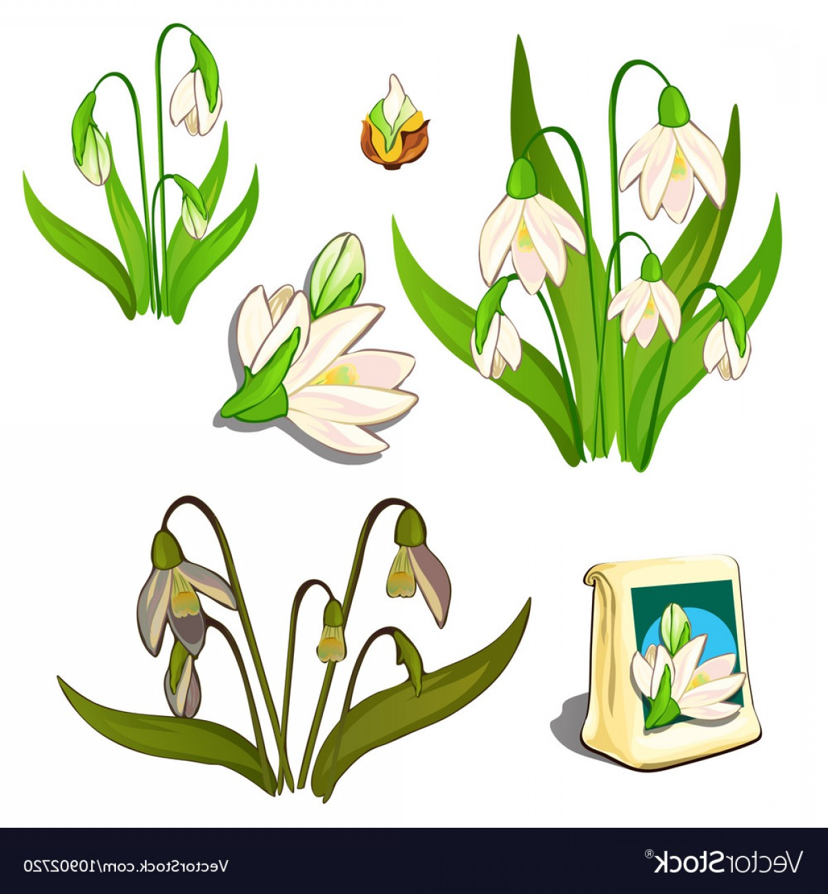 Seed Flower Vectors: Seeds Stages Of Growth And Wilting White Flowers Vector