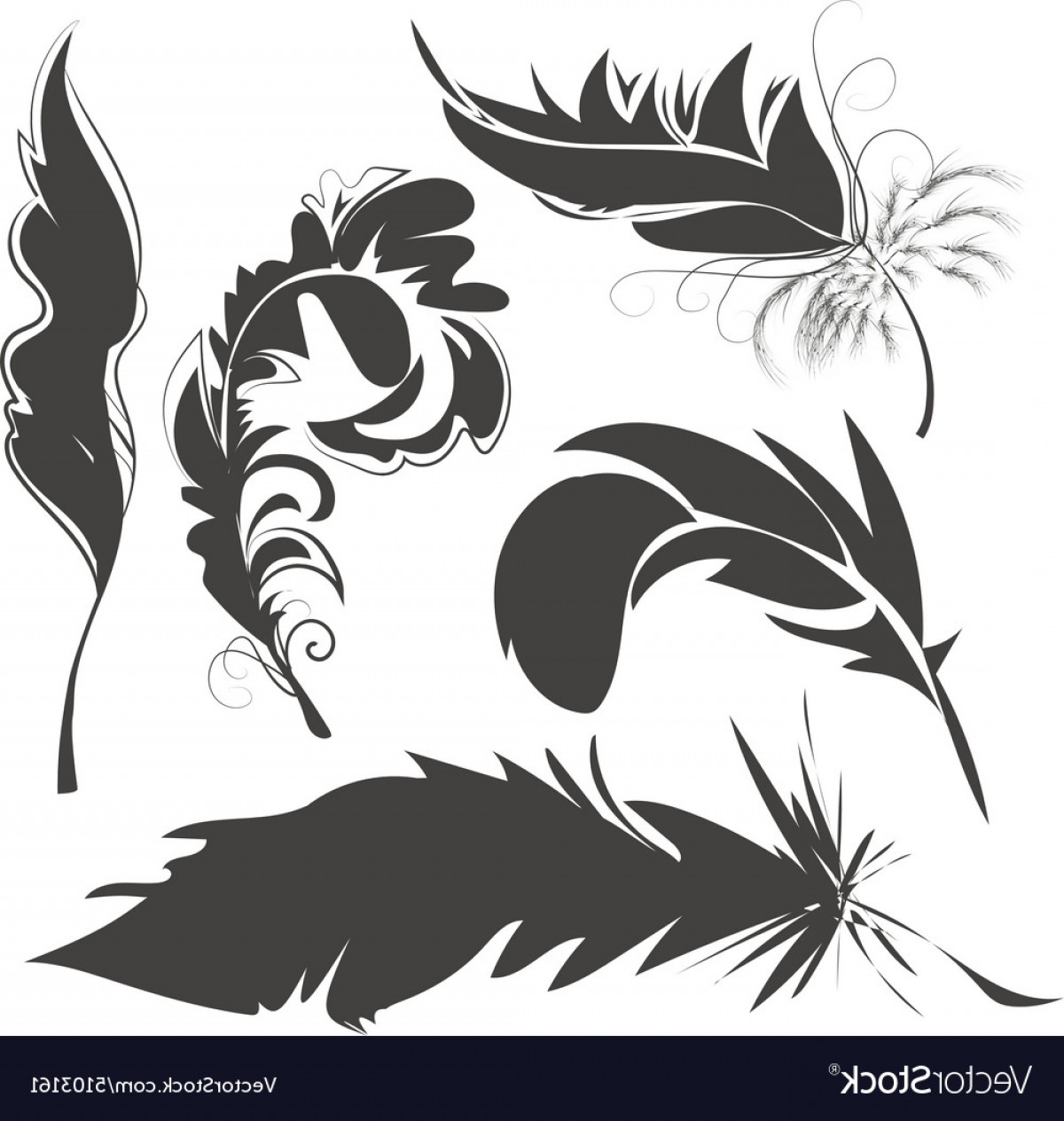 Vector Drawing Feathers: Set Bird Feathers For Drawing Vector