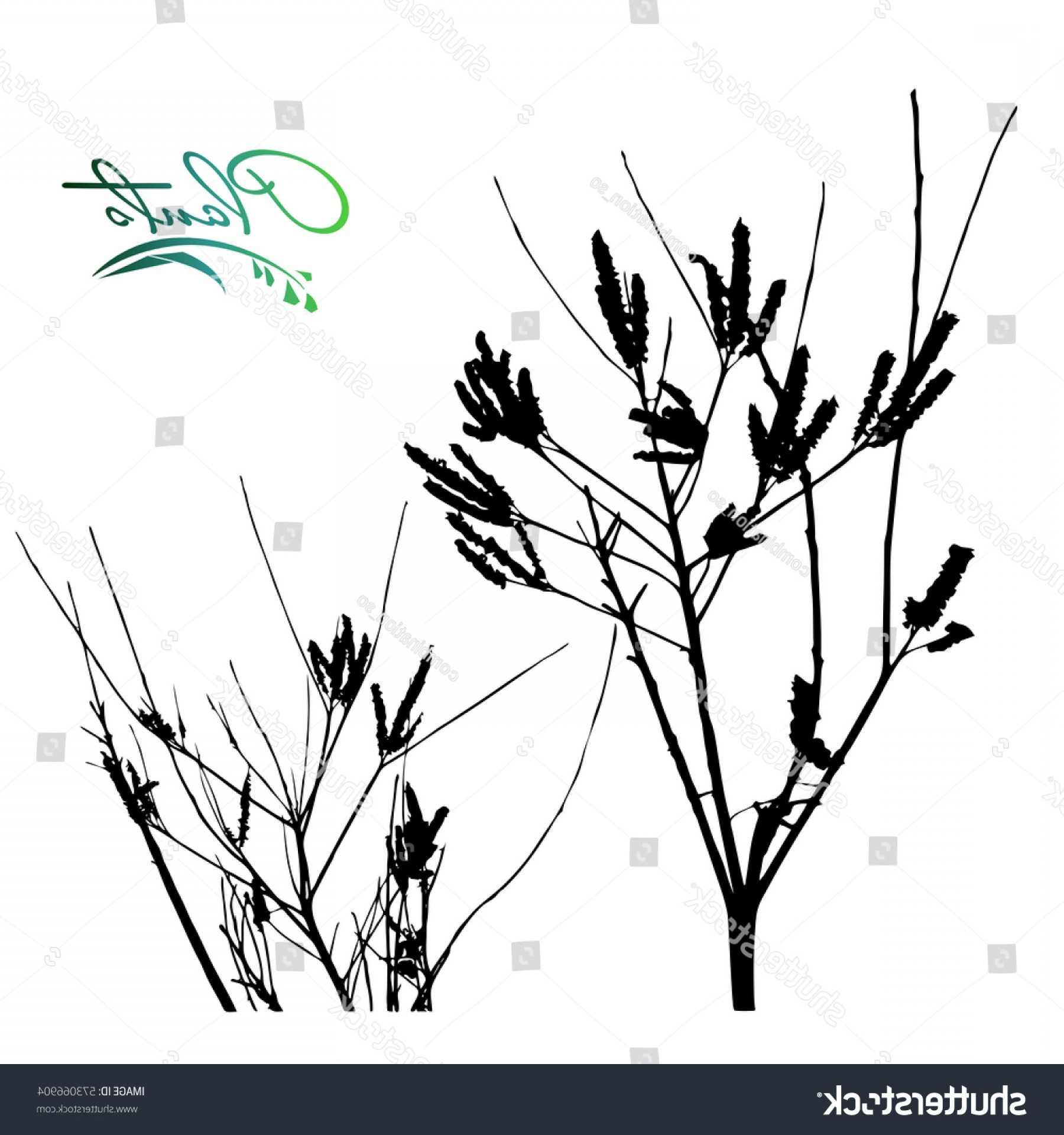 Sapling Vector Tree Silhouette Art: Set Branches Silhouette Sapling Seedling Flowers