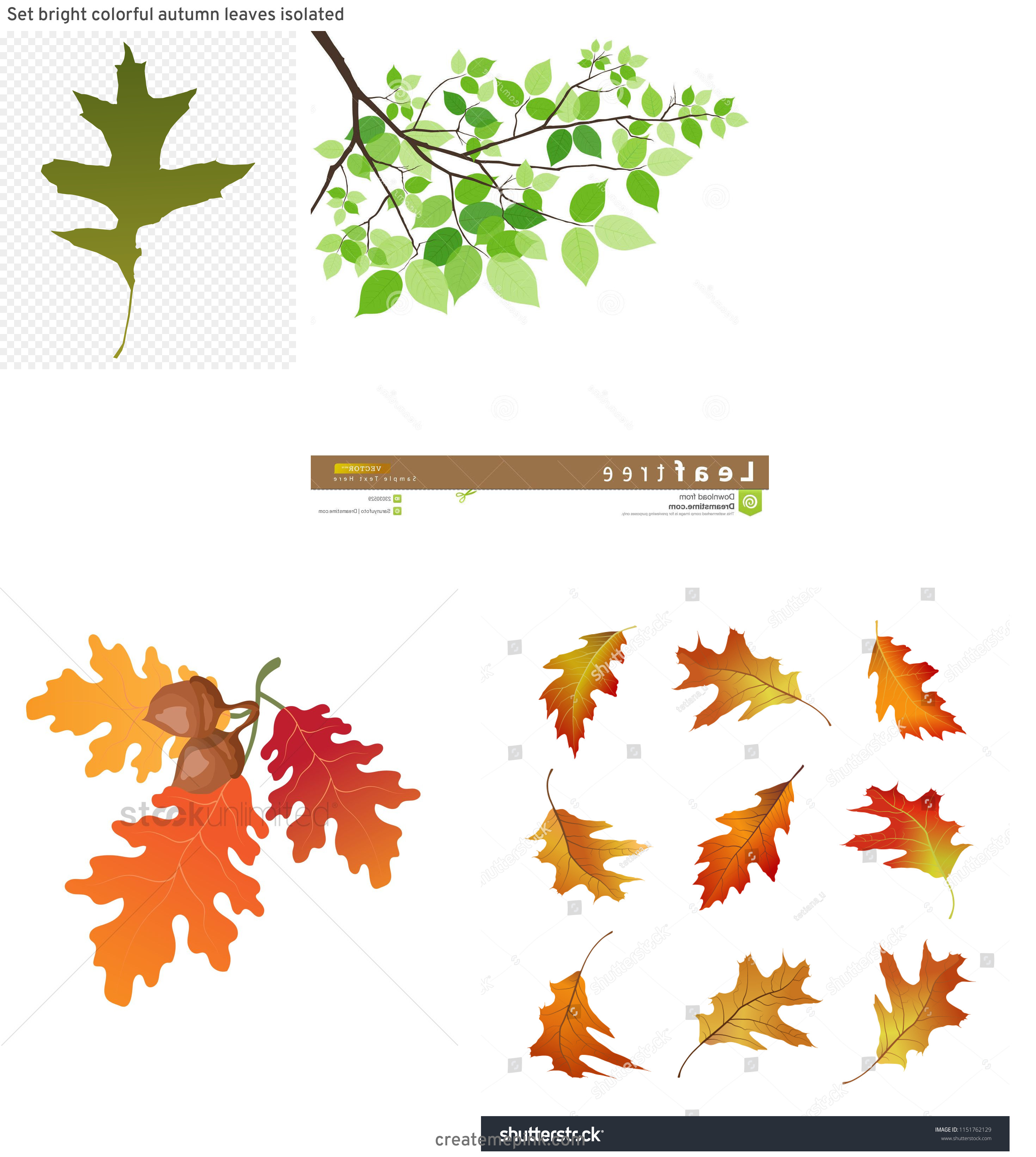 Falling Oak Leaves Vector: Set Bright Colorful Autumn Leaves Isolated