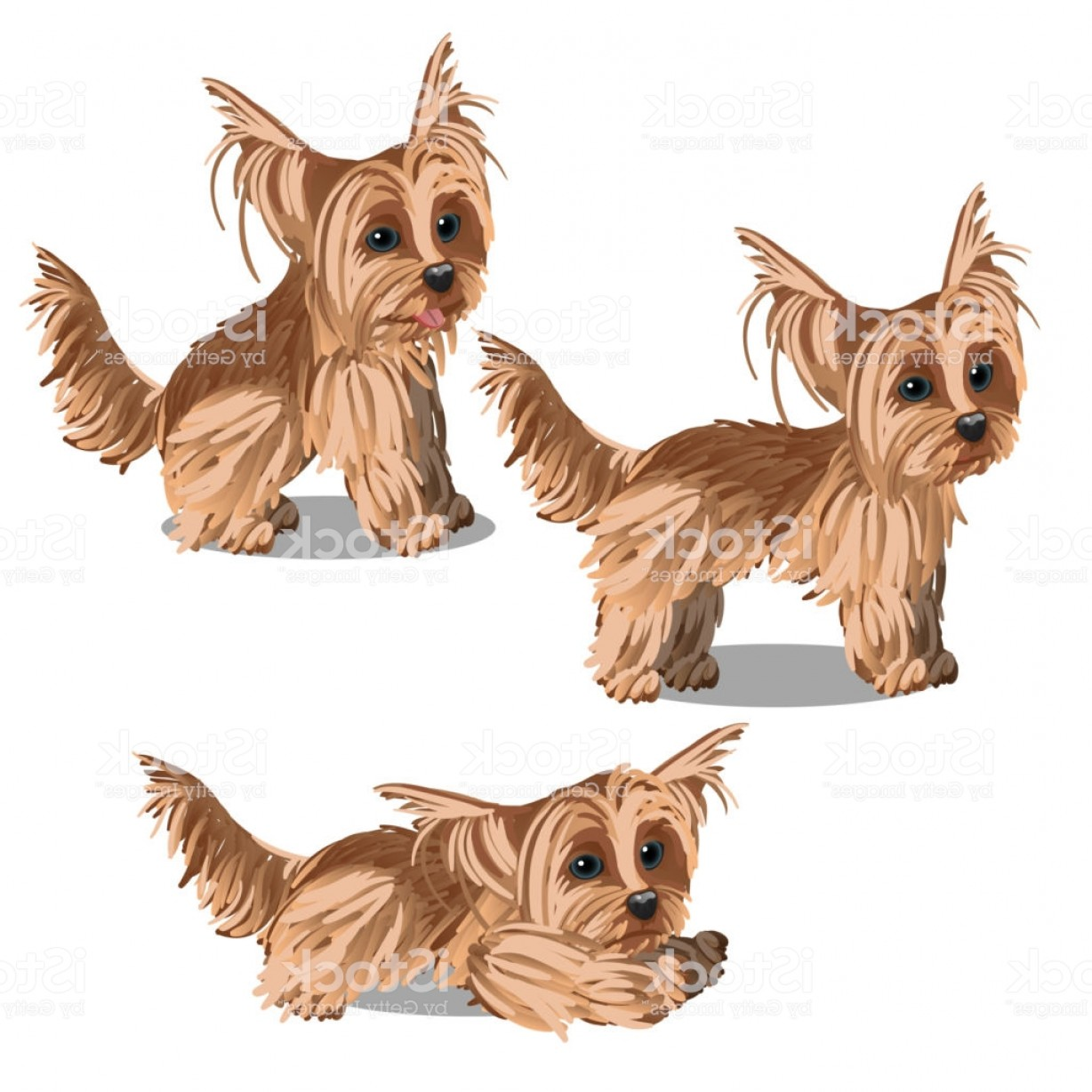 Cute Yorkie Dog Vector: Set Of Cartoon Animated Yorkshire Terrier Puppy Isolated On White Background Vector Gm
