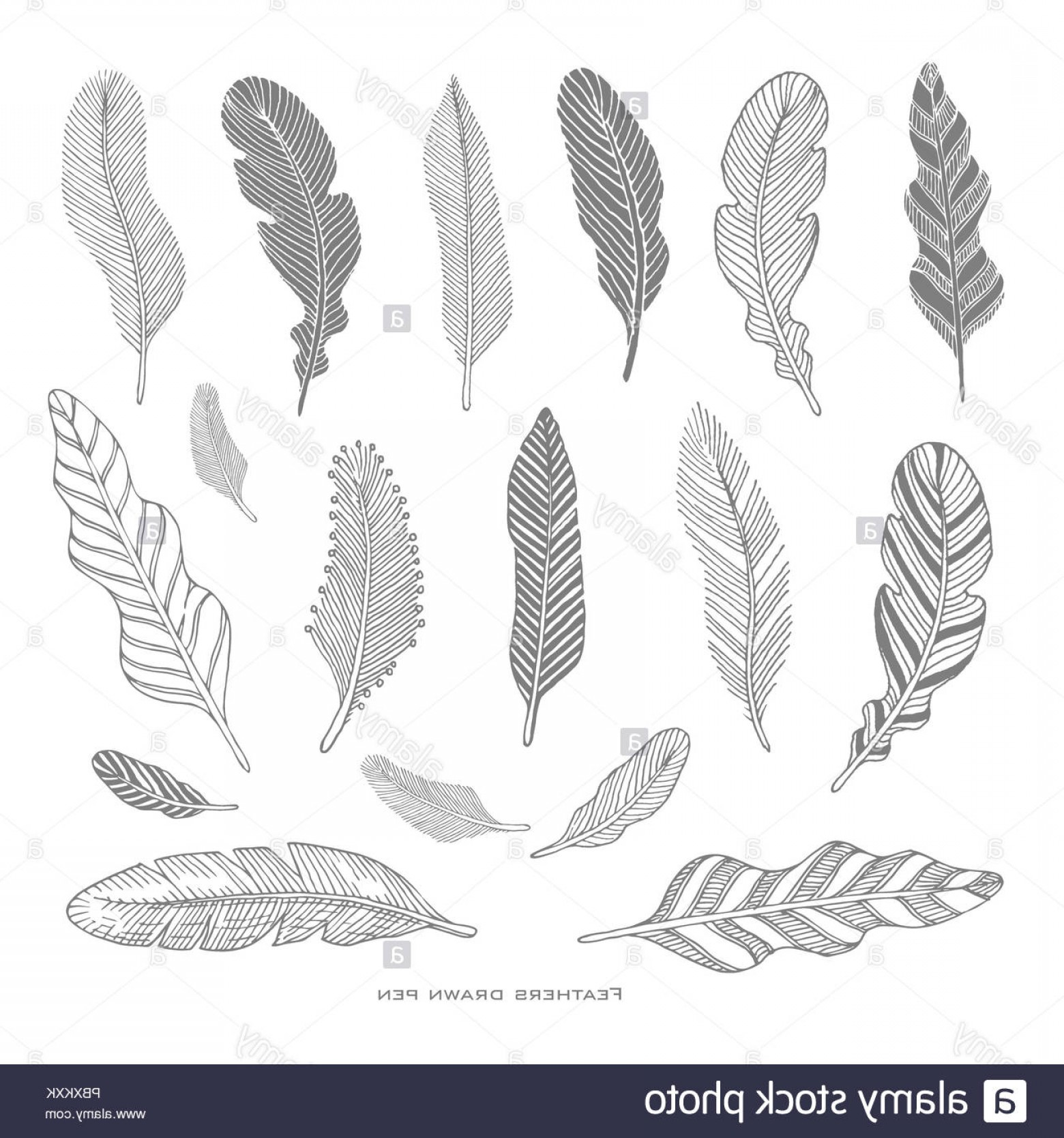 Vector Drawing Feathers: Set Of Hand Drawing Black Feathers Vector Illustration Image