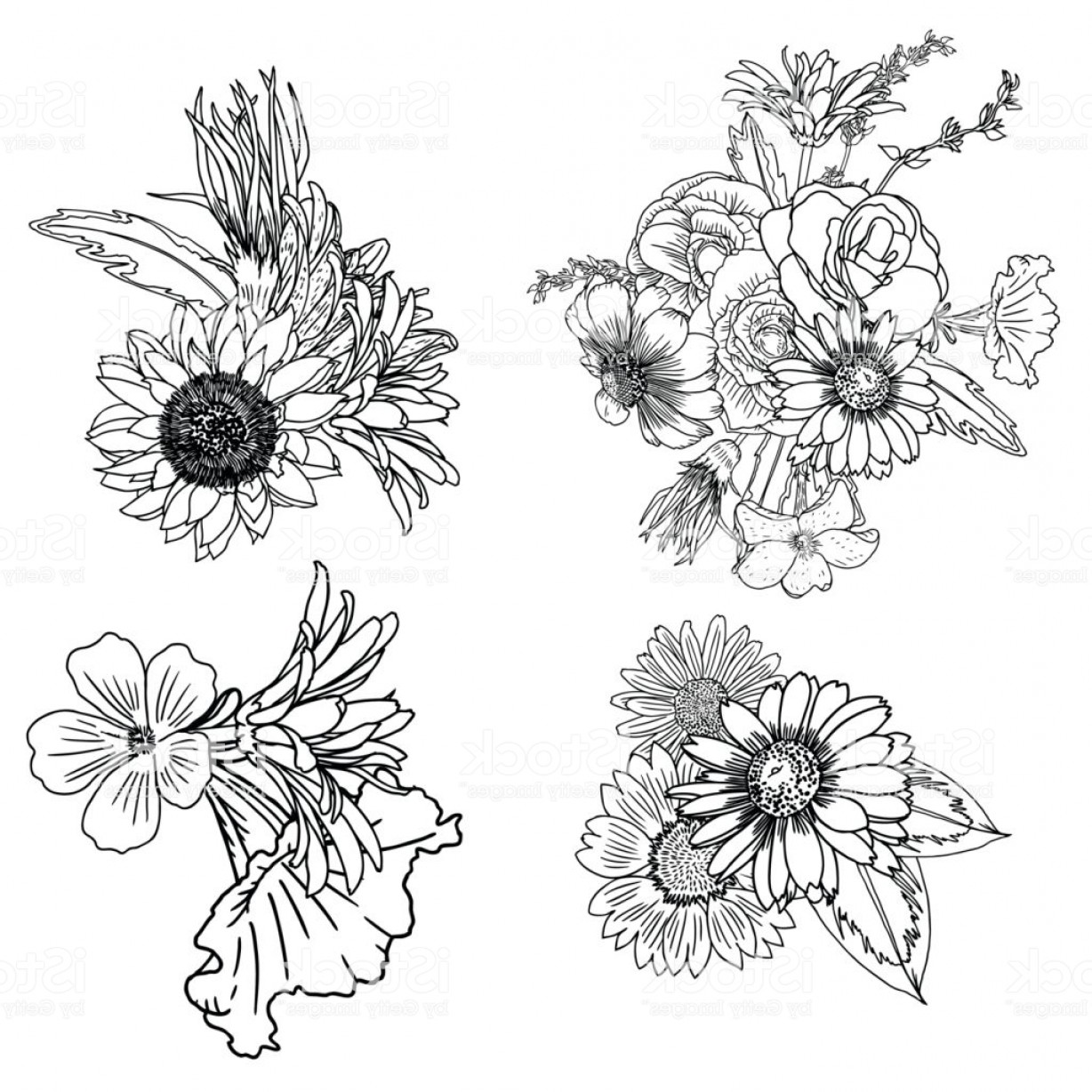 Floral Vector Illustration: Set Of Vintage Floral Vector Bouquet Of Petunia Coneflower Aster Poppy Chamomile Gm