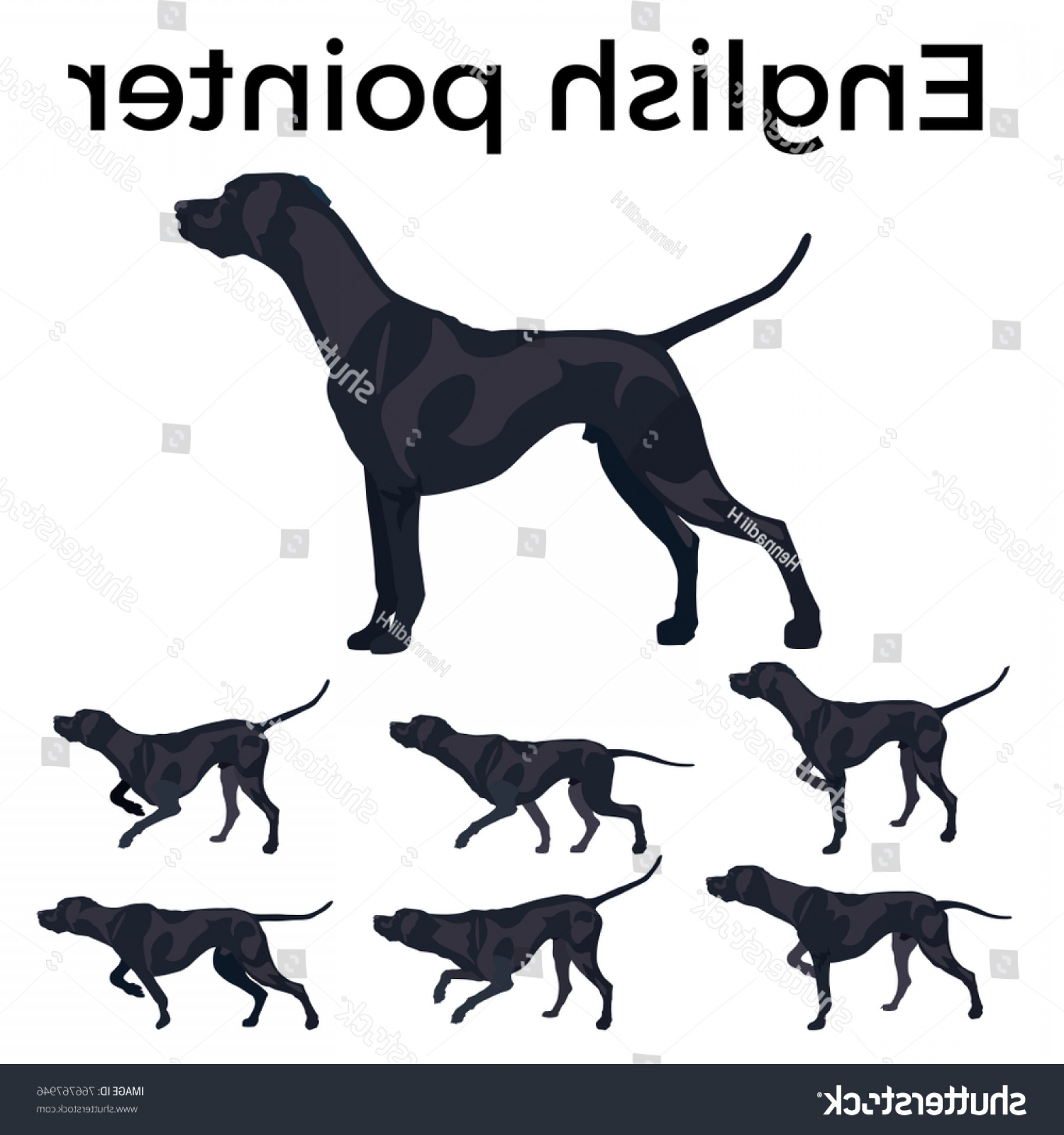 Pointer Dog Vector: Set Vector Pointer Dog Illustration Isolated