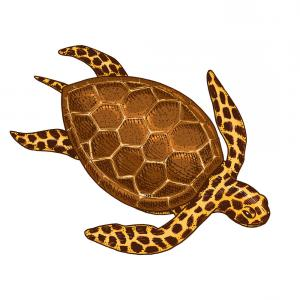 Lake Turtle Vector: Sea Creature Cheloniidae Or Green Turtle Engraved Vector
