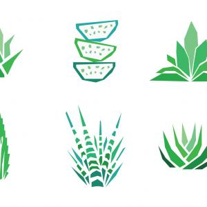 Aloe Vector Graphics: Aloe Vera Design Elements Stencil Style Gm