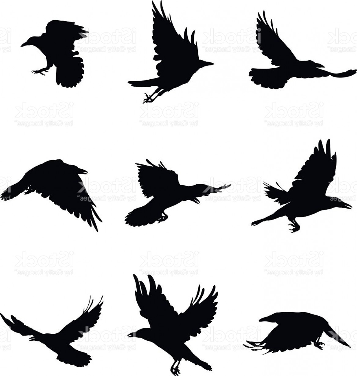 Bird Flying Vector Art: Shapes Of Flying Crows Gm