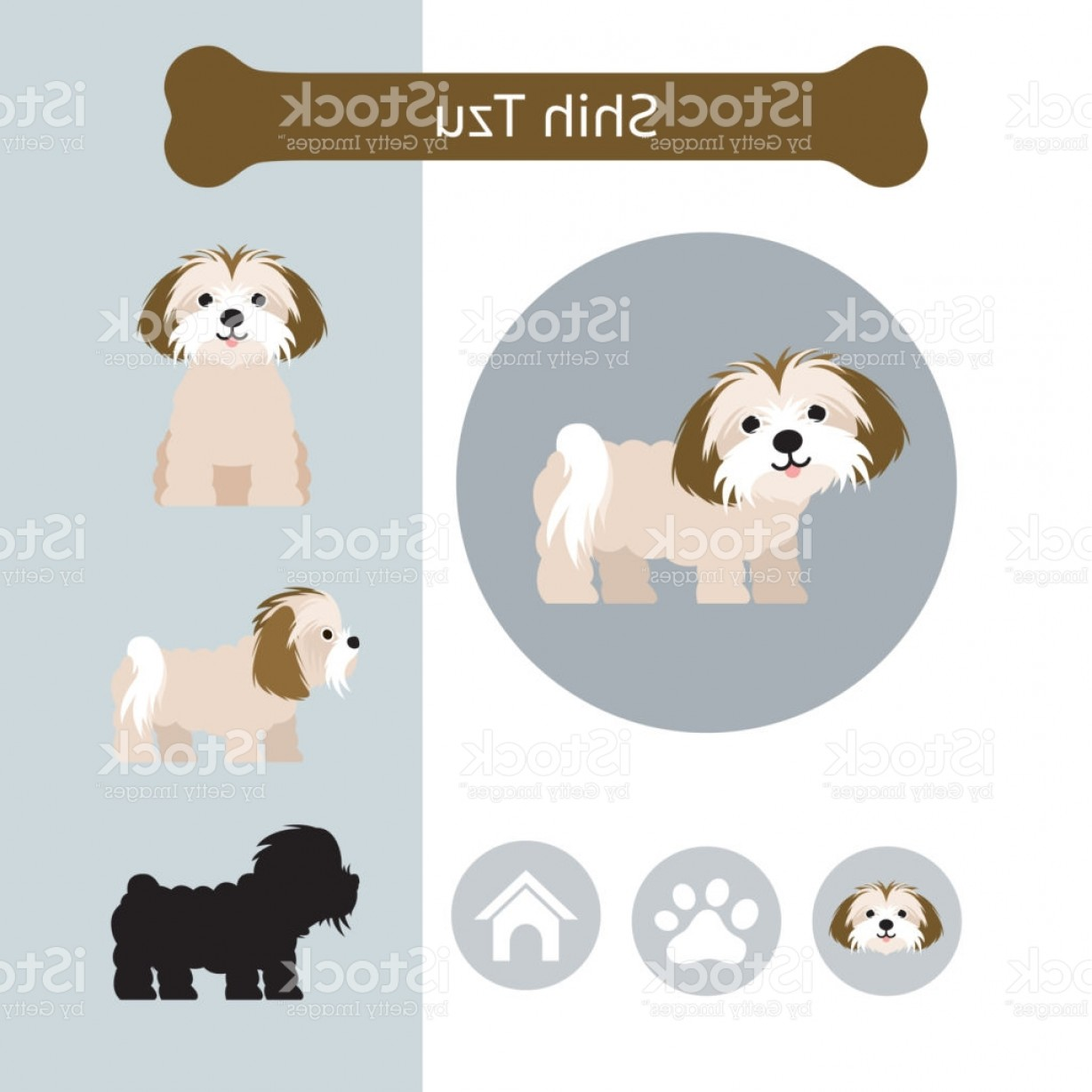 Shih Tzu Vector Siluete: Shih Tzu Dog Breed Infographic Gm