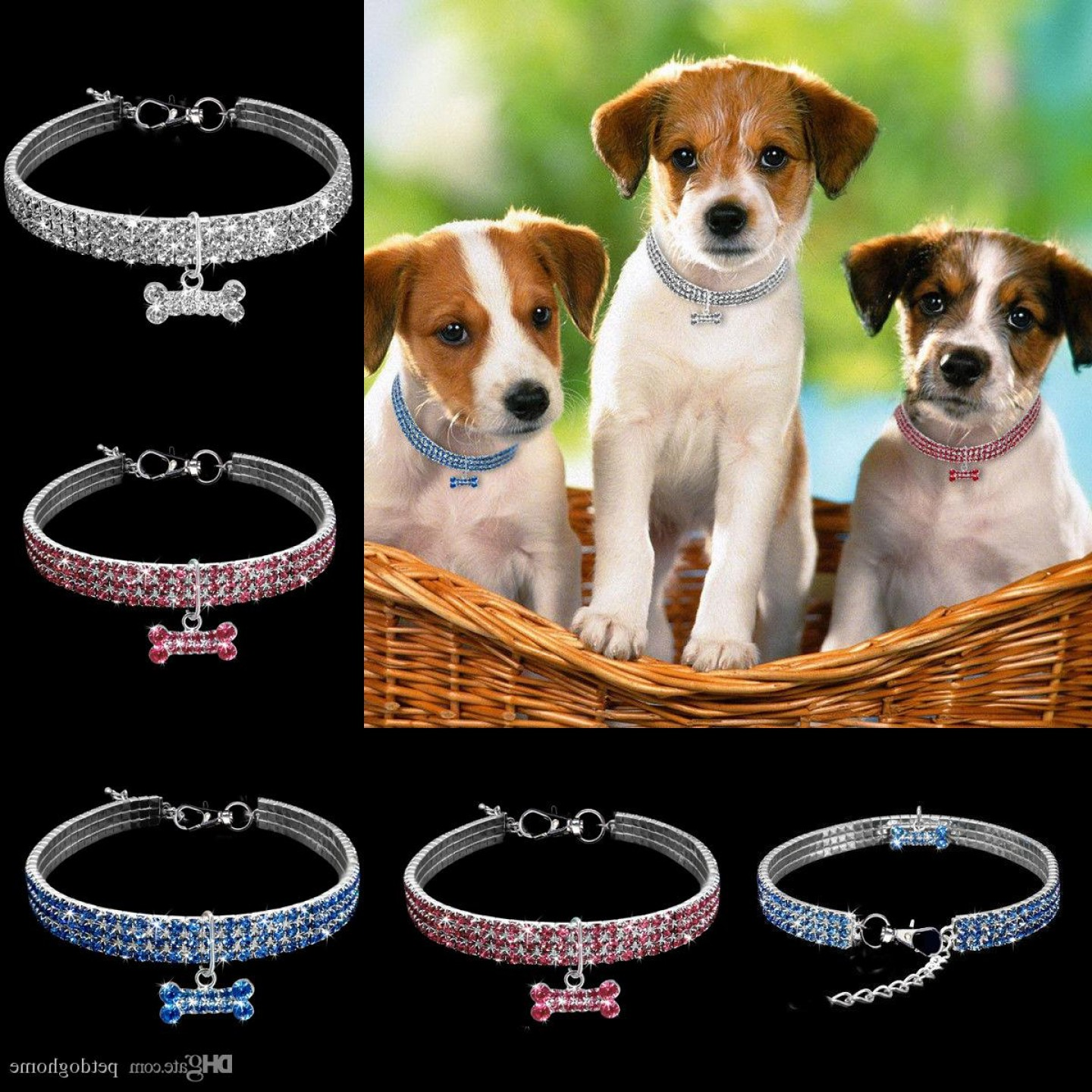 Vector Jeweled Dog Collar: Show Me Pictures Of Little Dogs