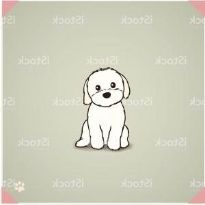 Shih Tzu Vector Cartoons: Shih Tzu Maltese Mix Puppy Gm