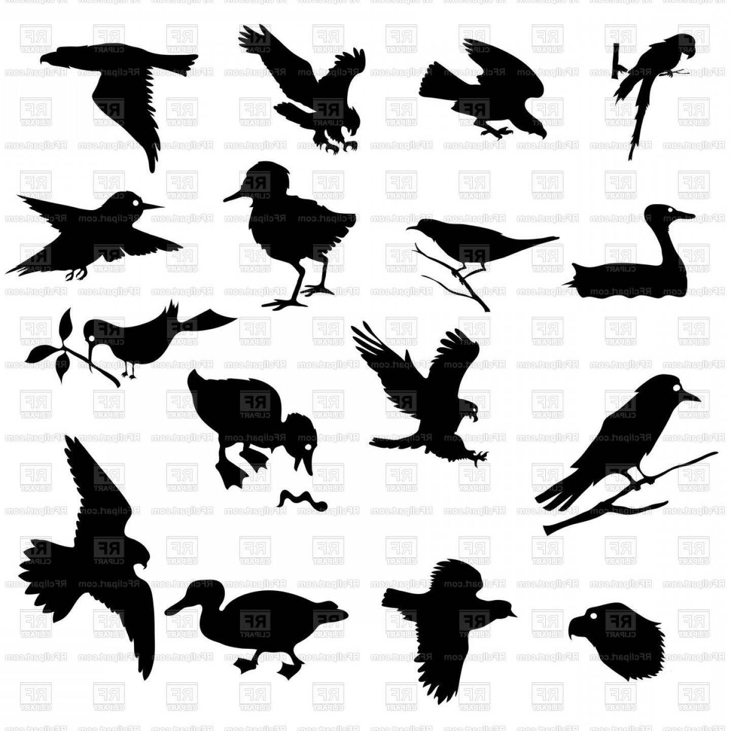 Poultry Vector Art: Silhouettes Of Birds And Poultry Vector Clipart