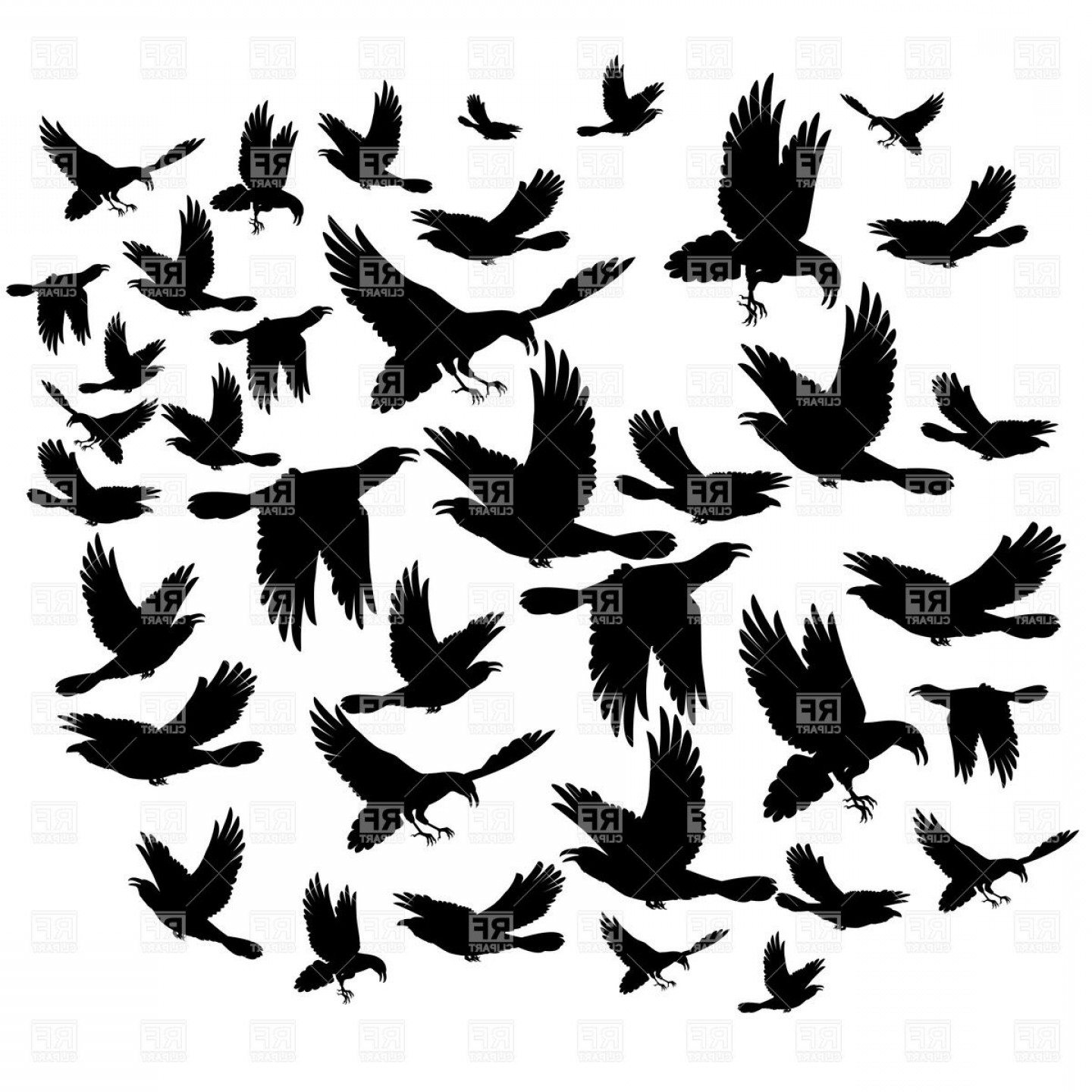 Bird Flying Vector Art: Silhouettes Of Birds Many Black Flying Crows Vector Clipart