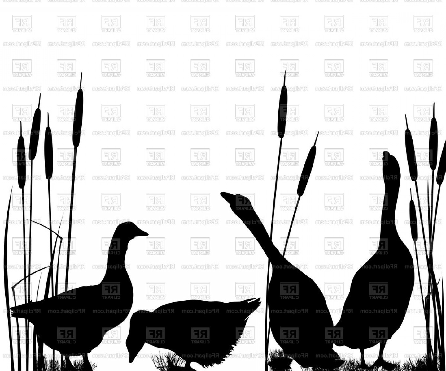 Poultry Vector Art: Silhouettes Of Gooses In Reed Poultry Vector Clipart