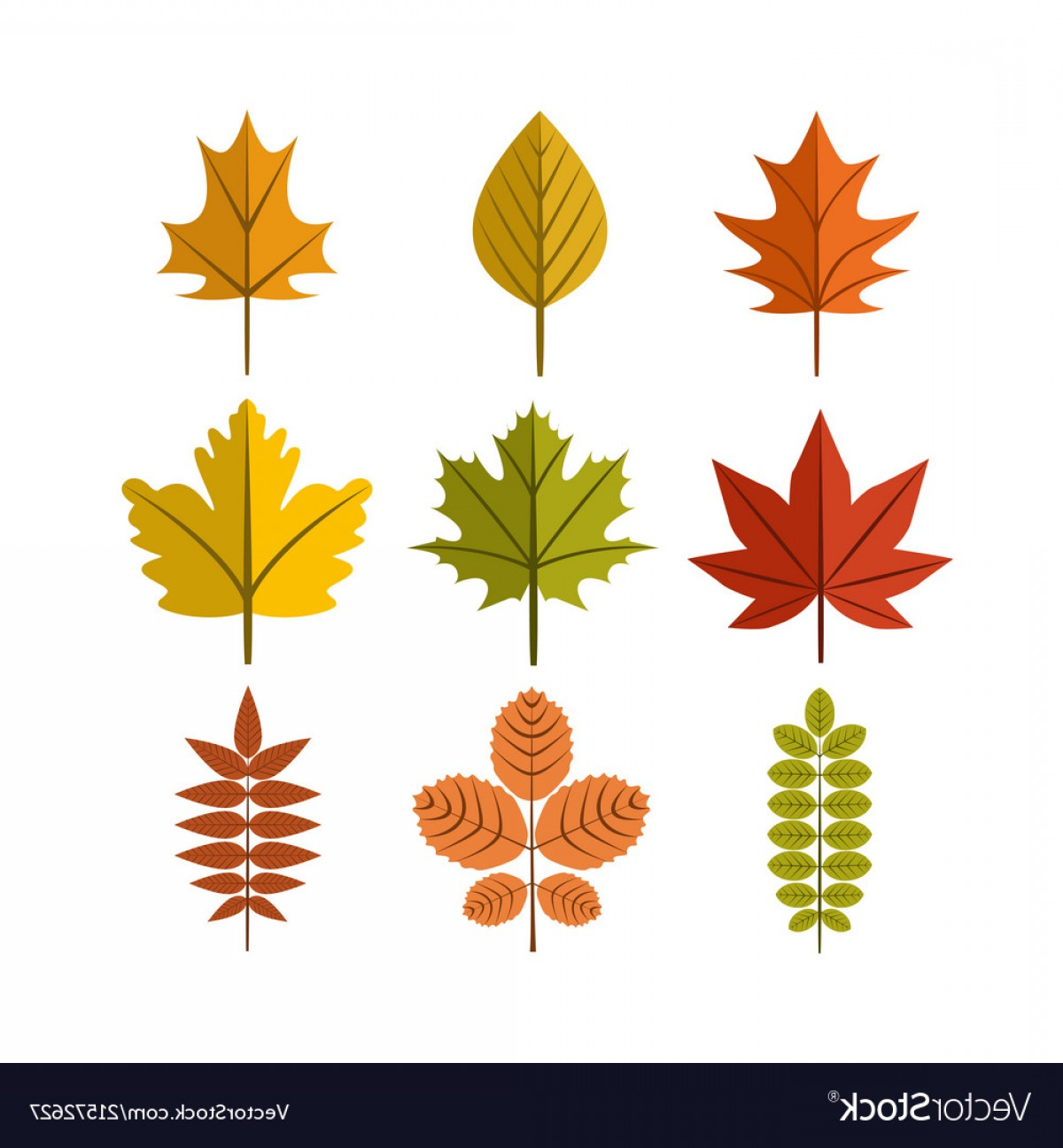 Vector Leaf Graphicd: Simple Autumn Leaf Symbol Graphic Design Template Vector