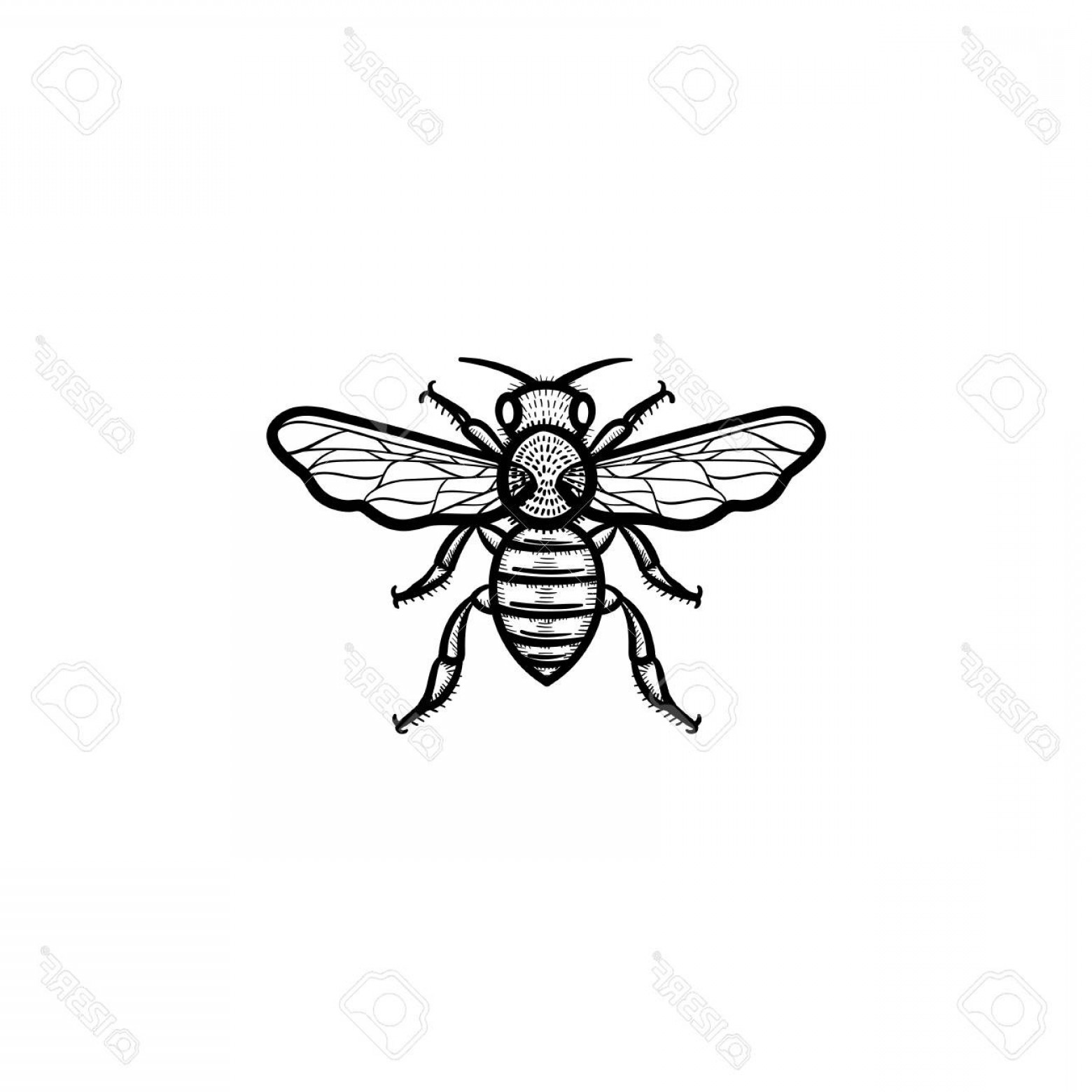 Bee Outline Vector: Simple Bee Icon Outline Vector With