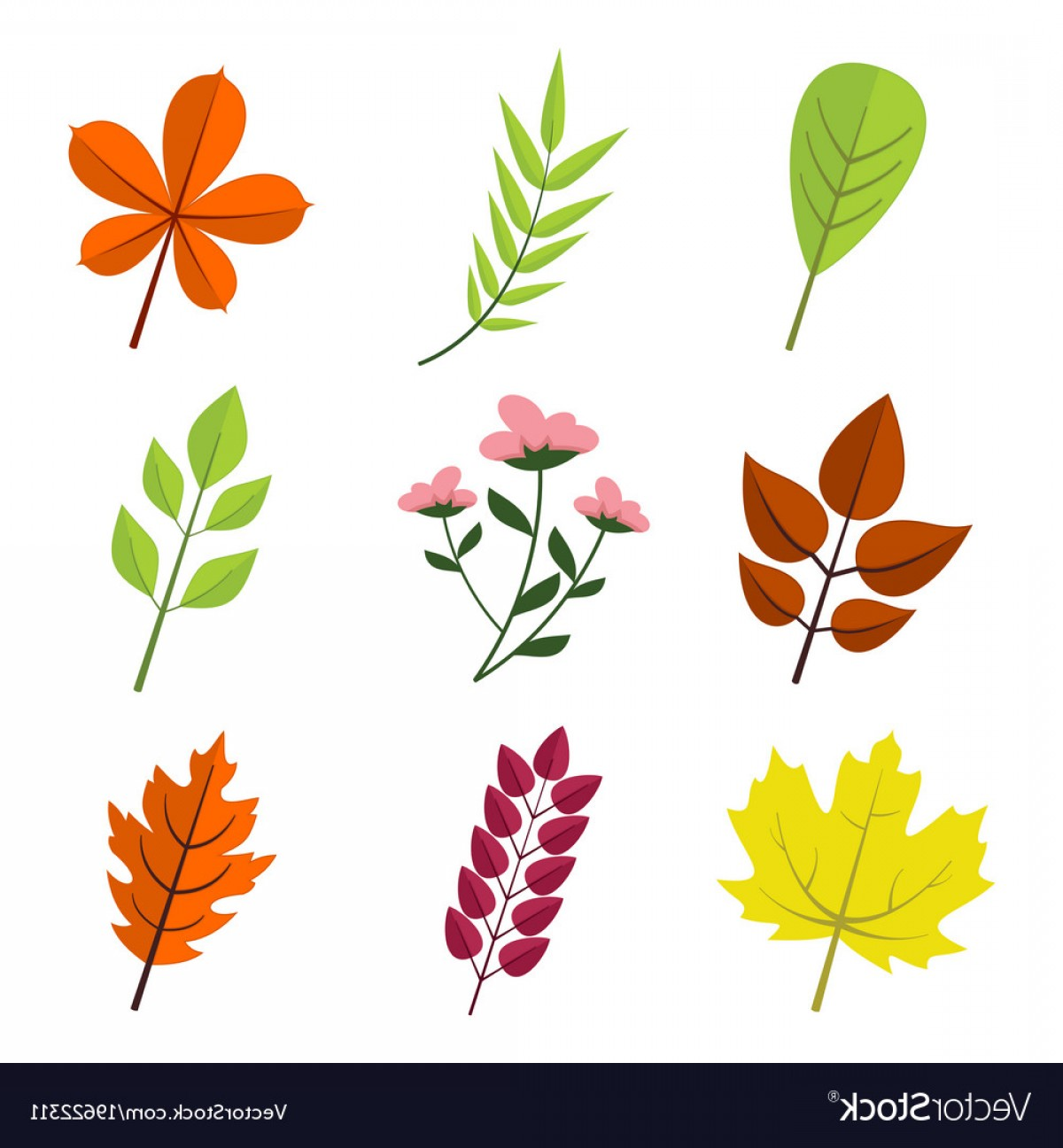 Vector Leaf Graphicd: Simple Floral Various Leaves Graphic Set Vector