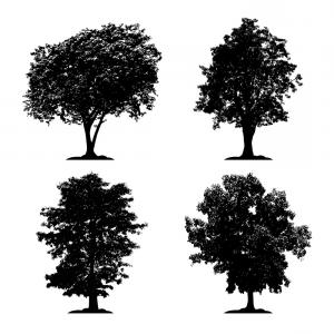 Black Forest Silhouette Vector: Silhouette Tree Set Isolated Black Forest Vector