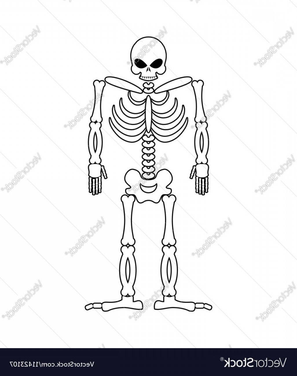 Line Art Human Body Skeleton Labeled Bones Of The Vector: Skeleton On White Background Skull And Bones Dead Vector