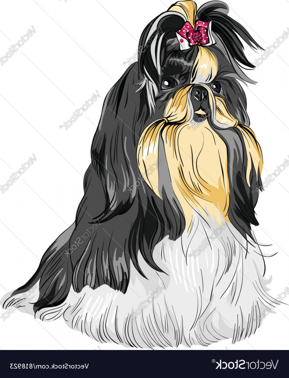 Shih Tzu Vector Siluete: Sketch Dog Shih Tzu Breed Vector