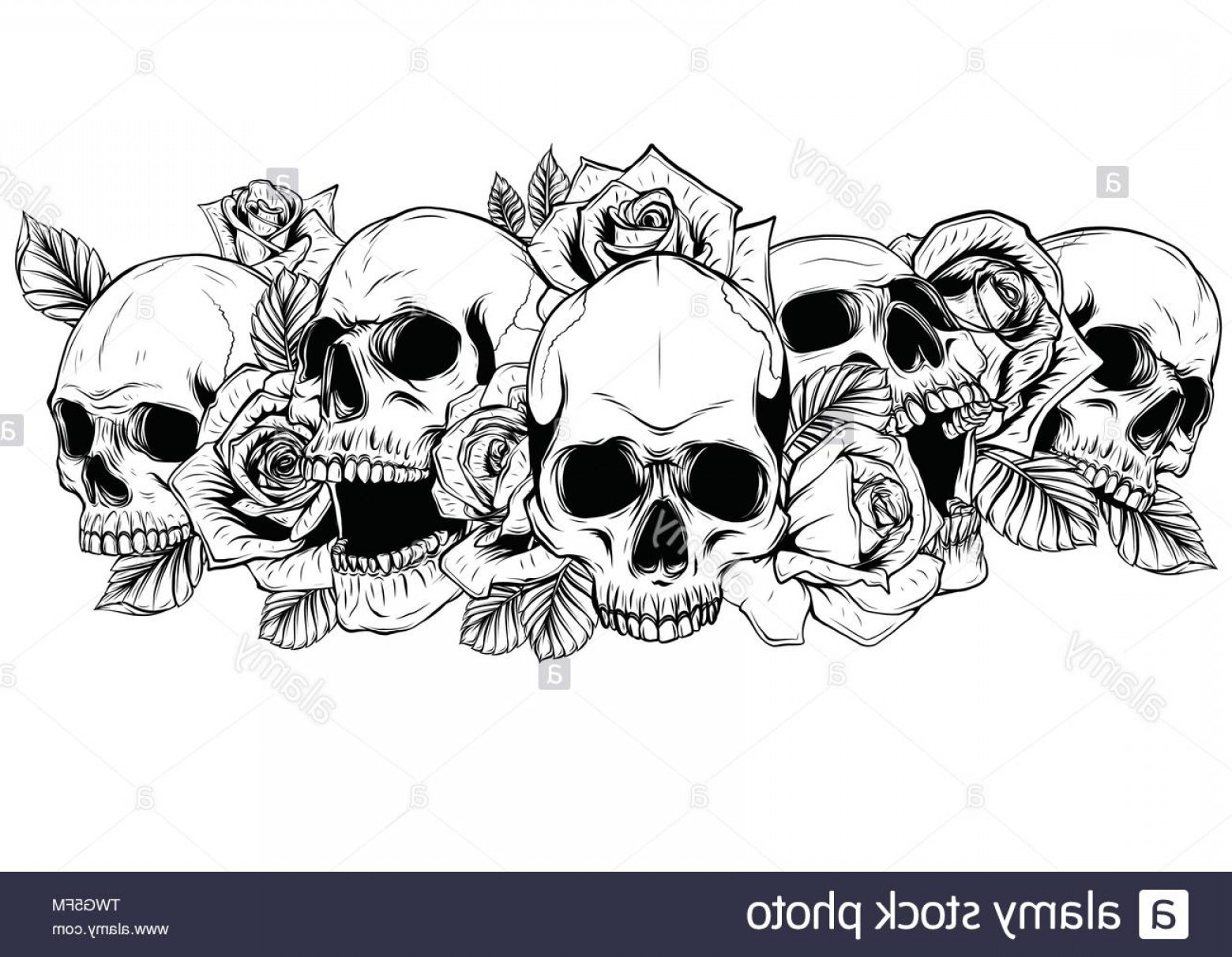 Detailed Tattoo Vector Images: Skull With Centifolia Roses Tattoo By Hand Drawingtattoo Art Highly Detailed In Japanese Line Art Style Image