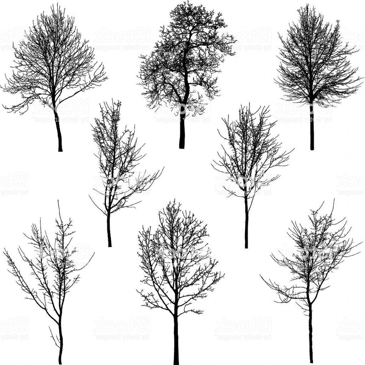 Sapling Vector Tree Silhouette Art: Small Tree And Sapling Silhouettes Gm