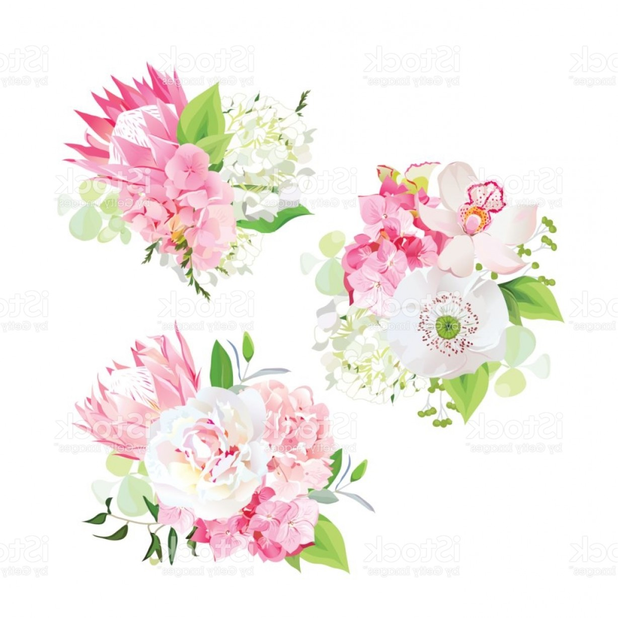 Hydrangea Vector Graphics: Spring Mixed Bouquets Of Pink And White Hydrangea Protea Flower Gm