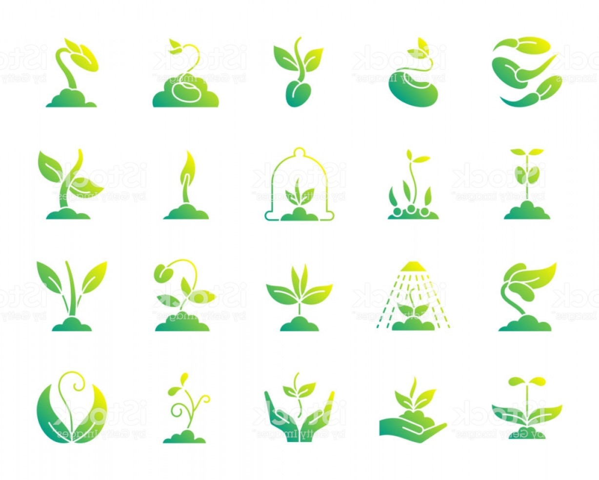 Alfalfa Sprouts Vector: Sprout Simple Gradient Icons Vector Set Gm