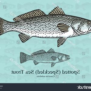 Speckled Trout Vector: American Rainbow Trout Salmon Predatory Fish Vector