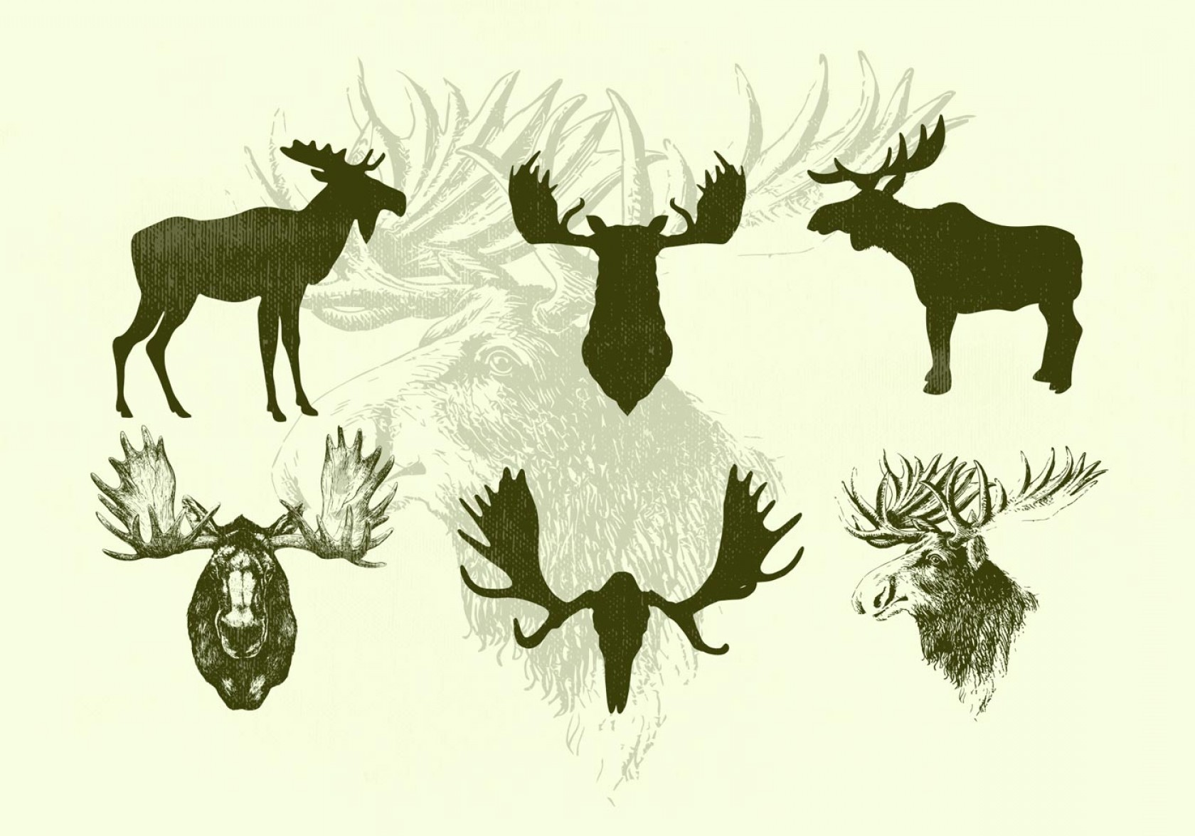 Moose Skull Vector: Standing Moose And Moose Heads Vector Silhouettes