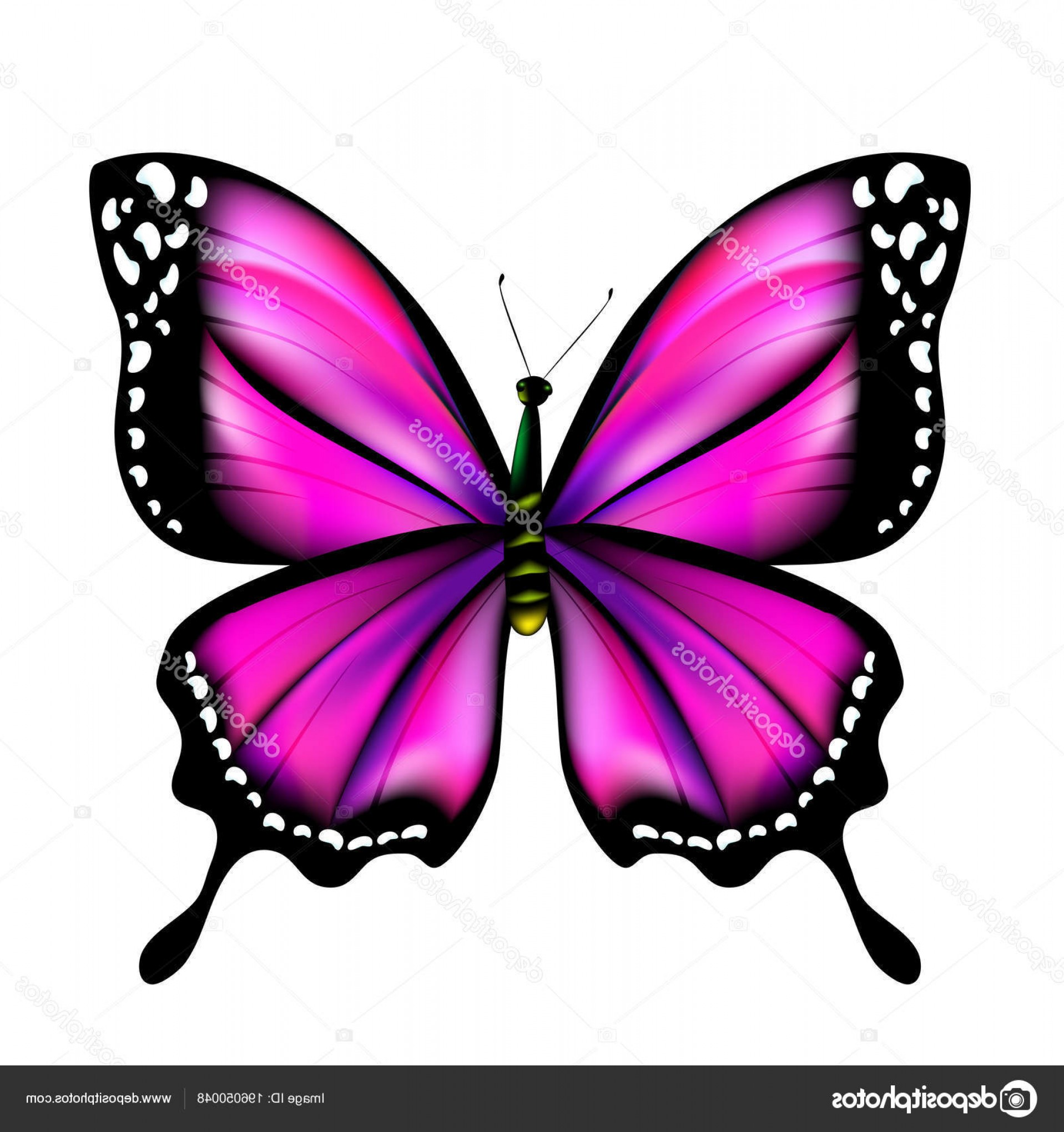 Real Butterfly Vector: Stock Illustration Beautiful Purple Butterfly Isolated White