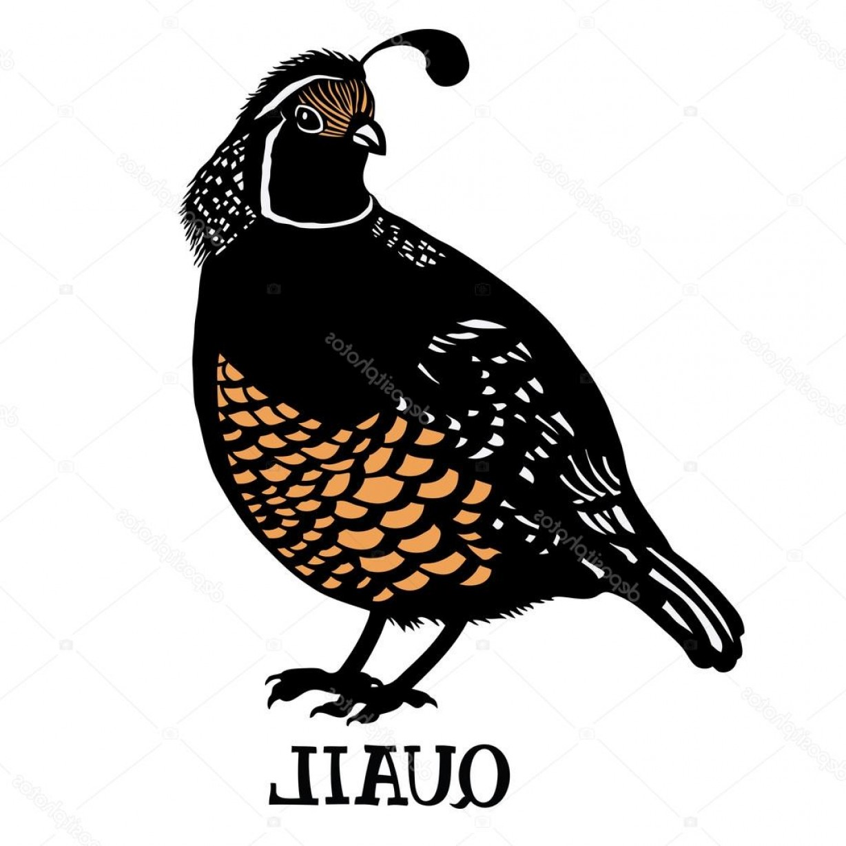 Quail Vector Art: Stock Illustration Birds Collection Quail Color Vector