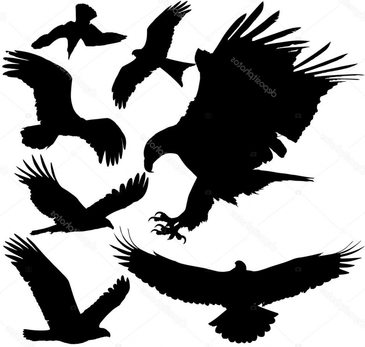 Falcon Silhouette Vector: Stock Illustration Birds Of Prey Eagle Hawk