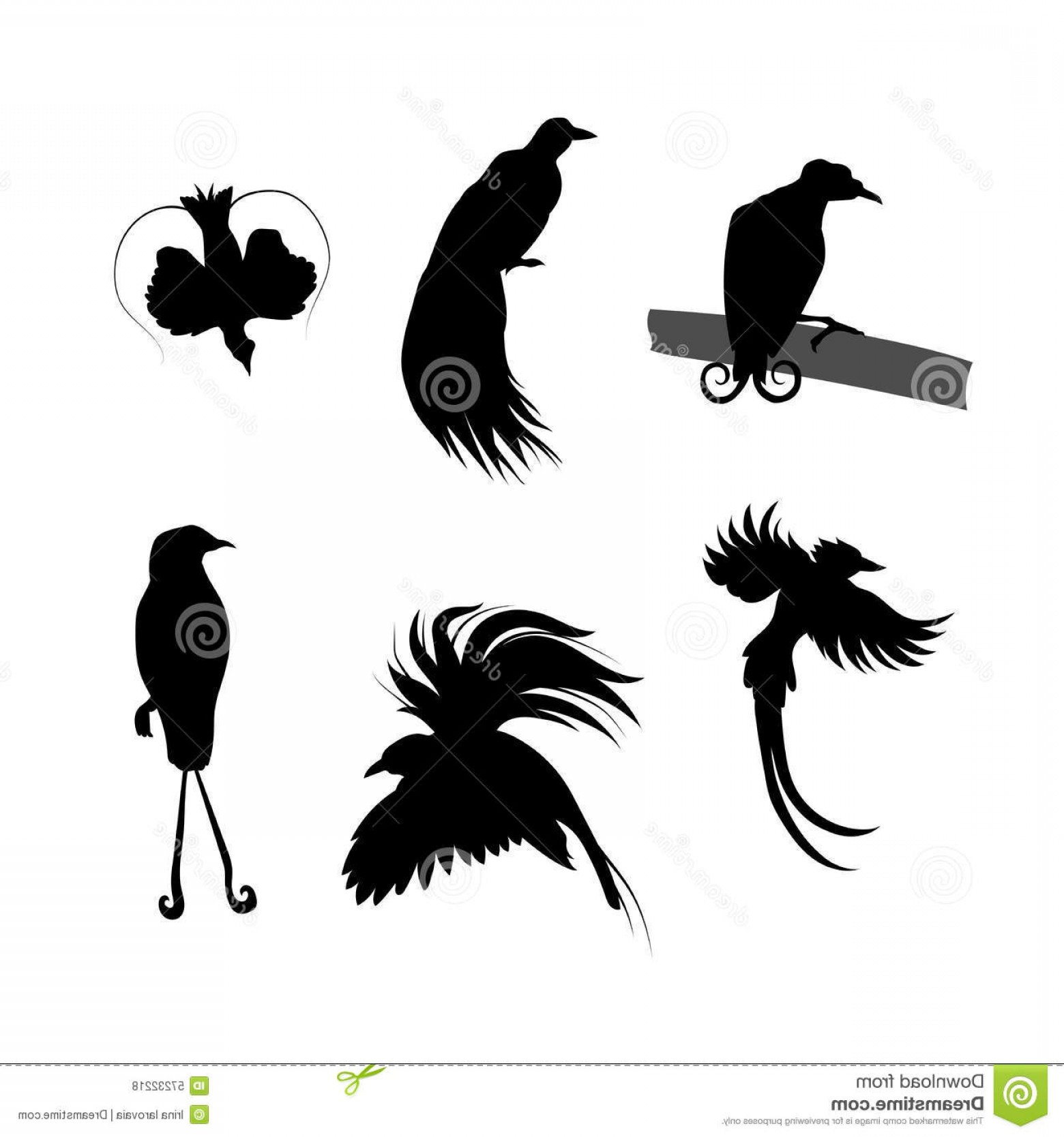 Bird In -Flight Vector Image: Stock Illustration Birds Paradise Vector Silhouettes Icons Little Illustrations Different Poses Image