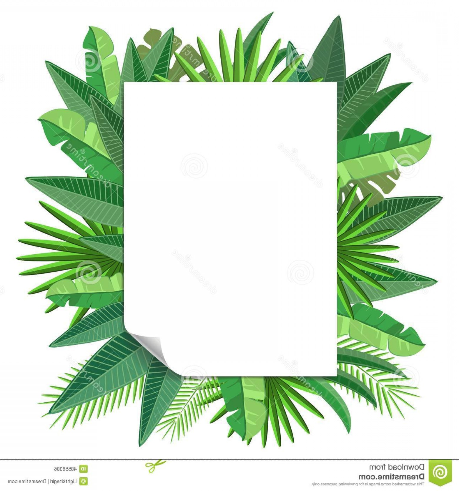 Pine Leaf Vector: Stock Illustration Blank Paper Tropical Leaves Vector Design Image