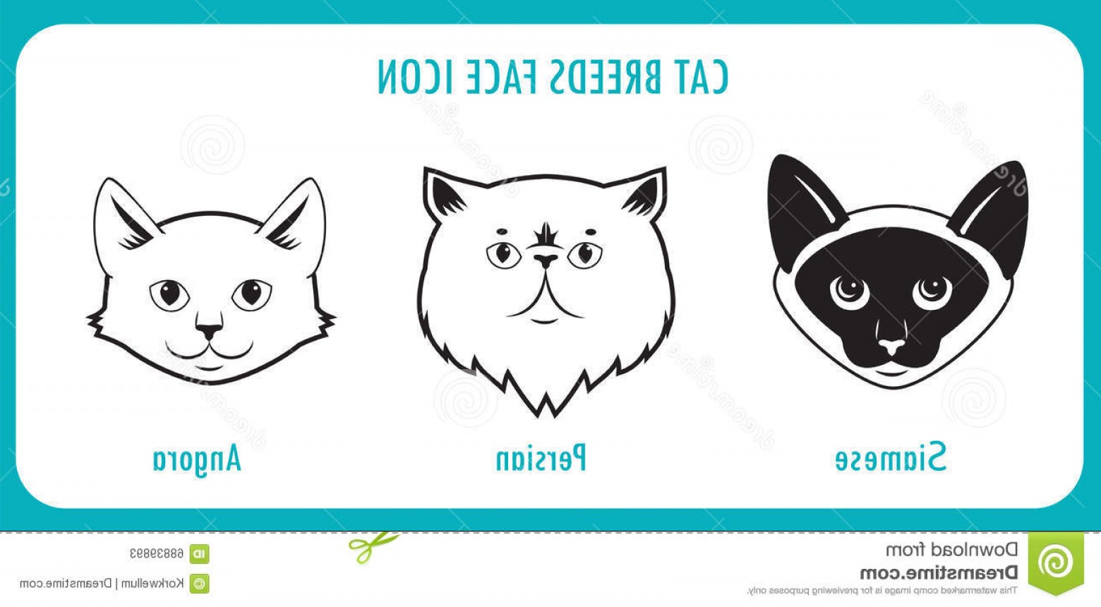 Siamese Cat Vector Transparent Background: Stock Illustration Breeds Face Icons Angora Persian Siamese Cat Black White Vector White Background Cat Pictures Cat Image