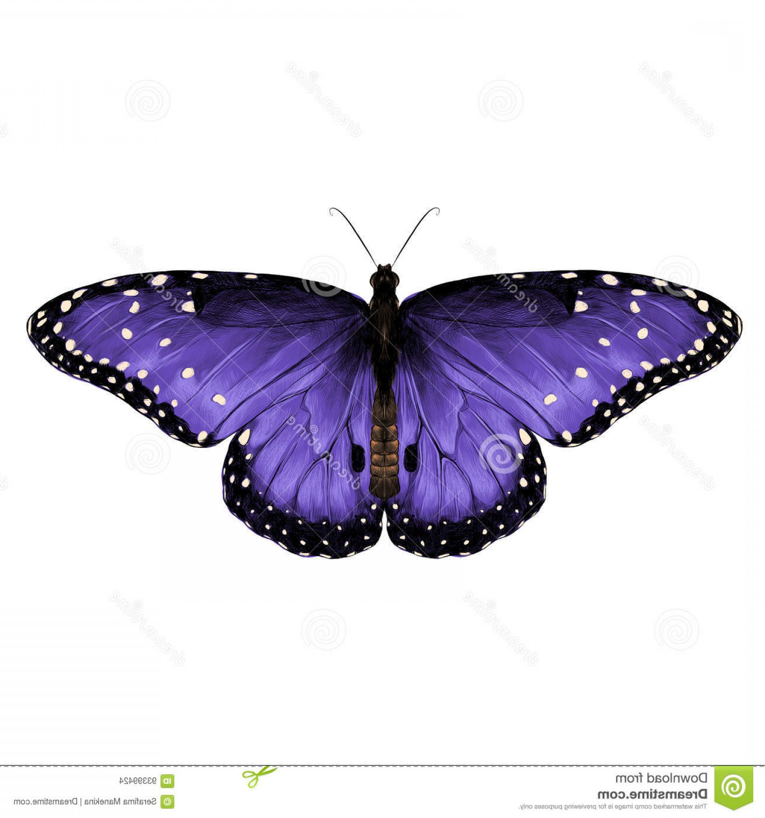 Real Butterfly Vector: Stock Illustration Butterfly Sketch Vector Graphics Top View Symmetrical Purple Stained Color Picture Image