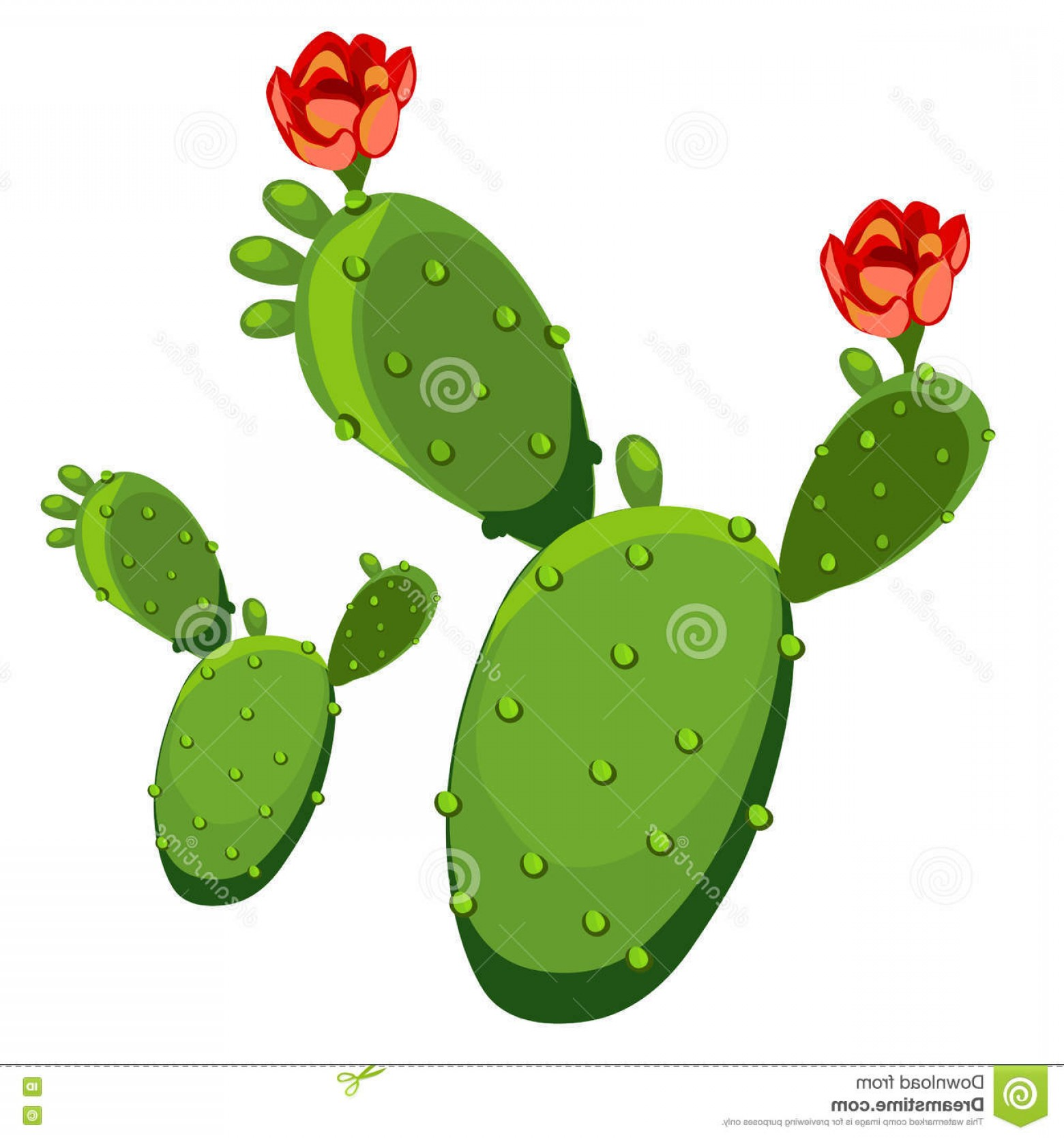Cactus And Flower Vector: Stock Illustration Cactus Flower Vector Illustration Isolated White Background Your Design Needs Image