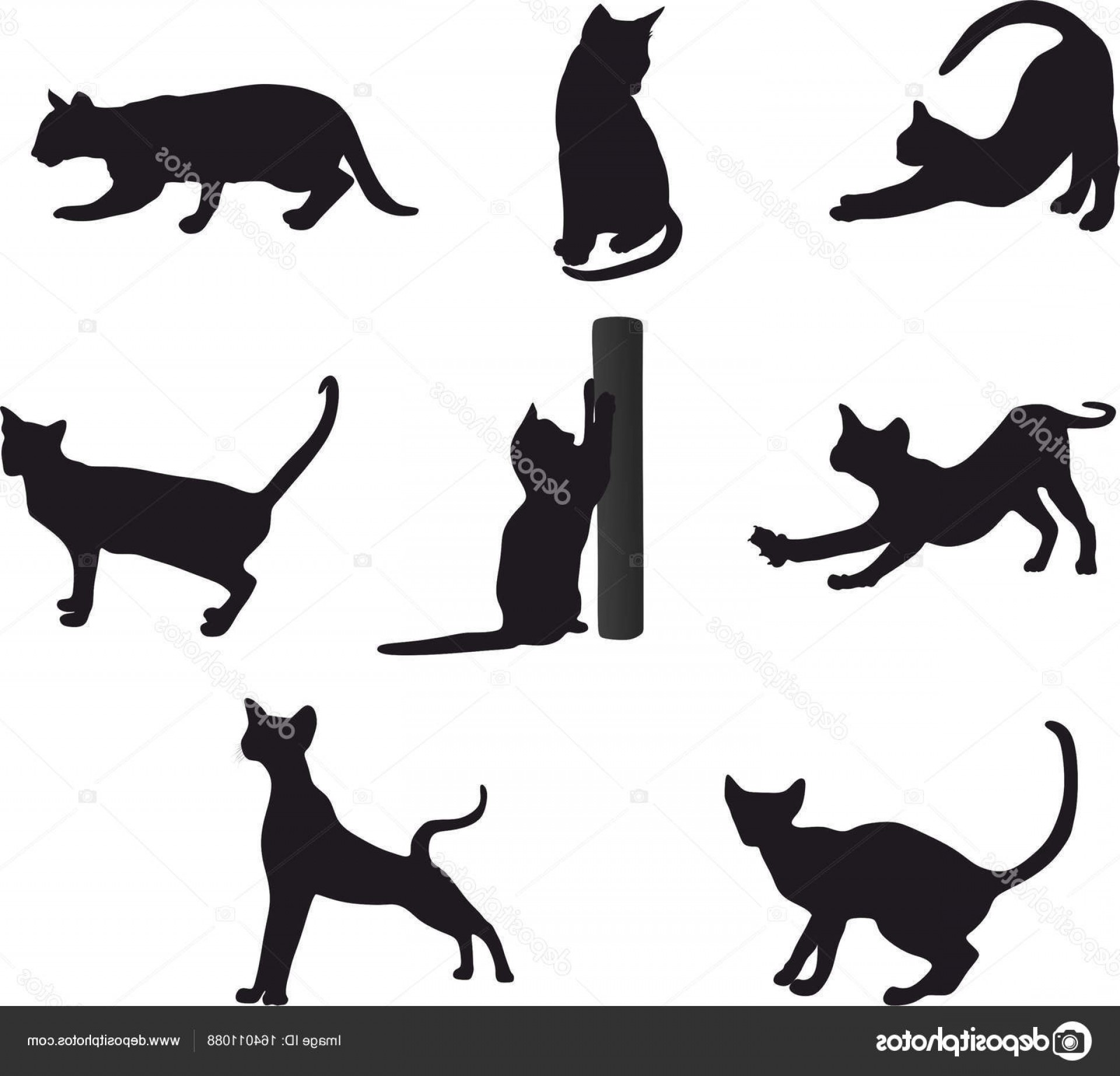 Malee Cat Head Silhouette Vector: Stock Illustration Cat Vector Silhouette Set