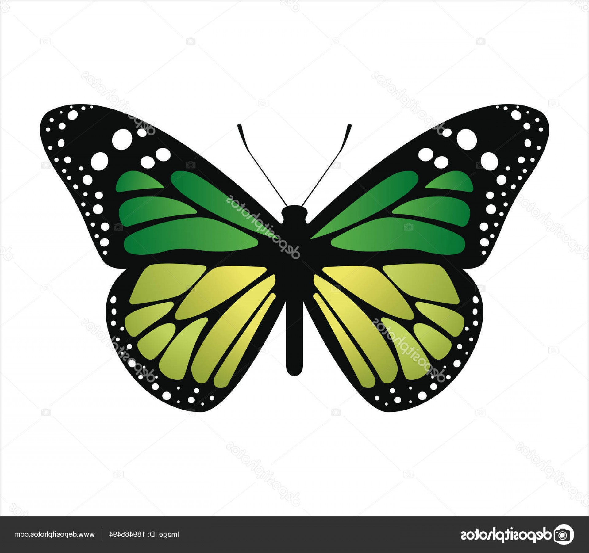 Butterly Vector: Stock Illustration Colorful Butterfly Vector Illustration