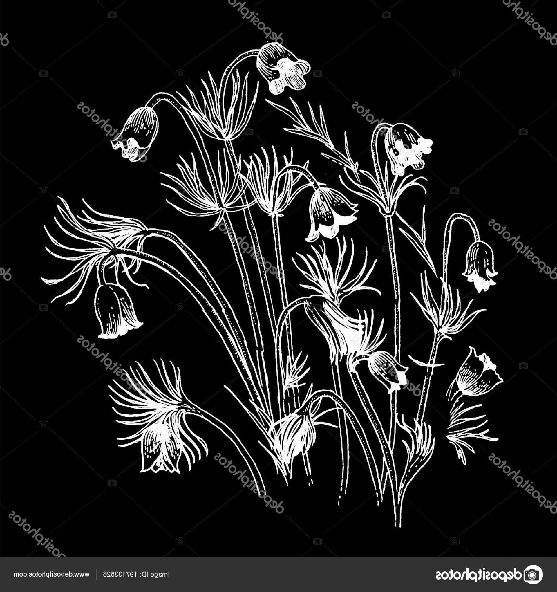 Wildflowers Outline Vector: Stock Illustration Composition White Outline Wildflowers Black