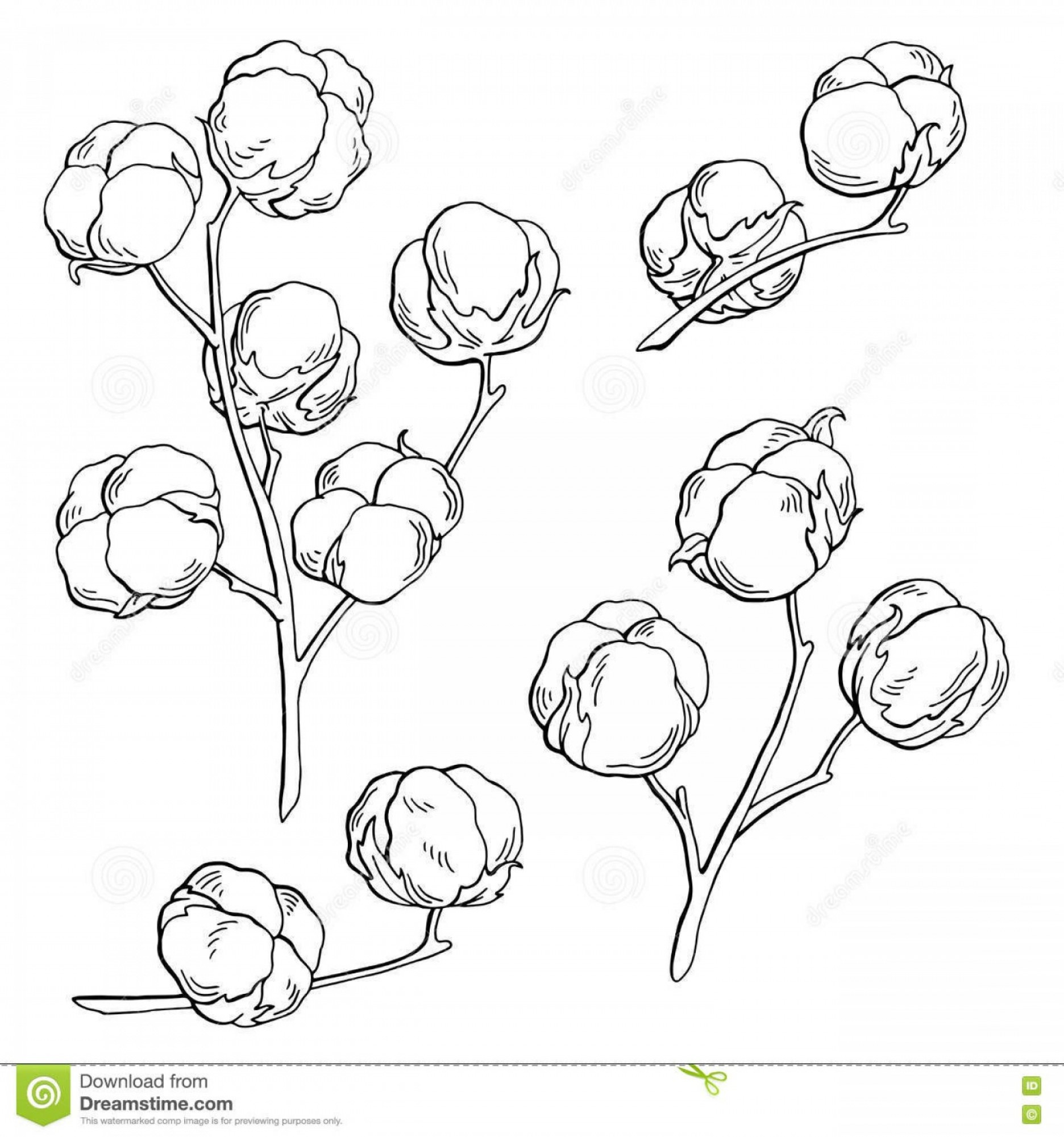 Cotton Vector Graphic: Stock Illustration Cotton Plant Graphic Black White Isolated Sketch Illustration Vector Image